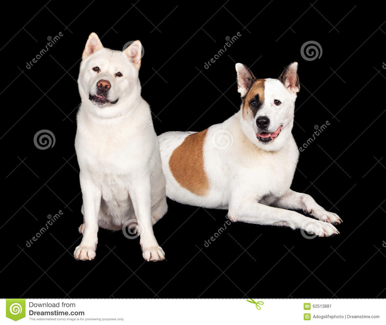Dogs Relaxing Over Black Background Stock Photo - Image: 62513881 Relaxing Dogs