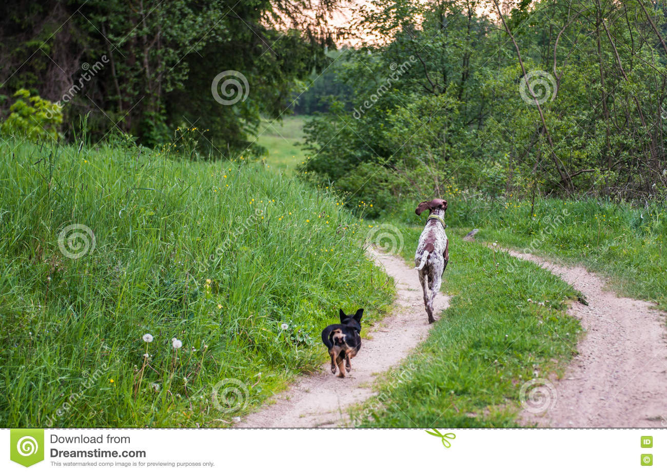 Dogs running in forest