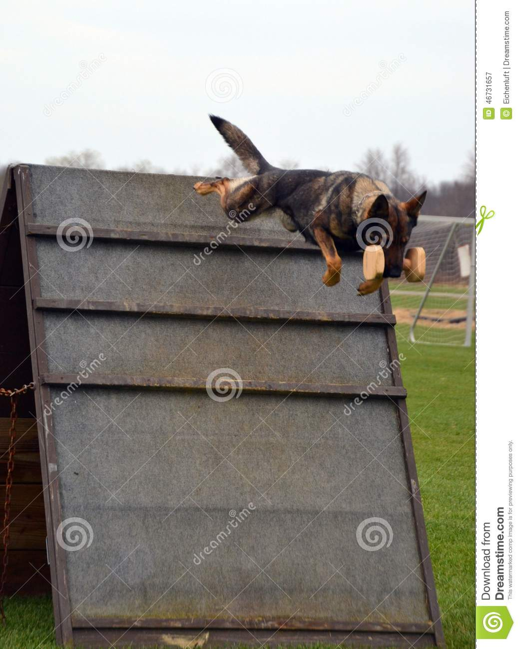 Dogs 050 stock image  Image of jump, dumbbell, dogs, retrieving