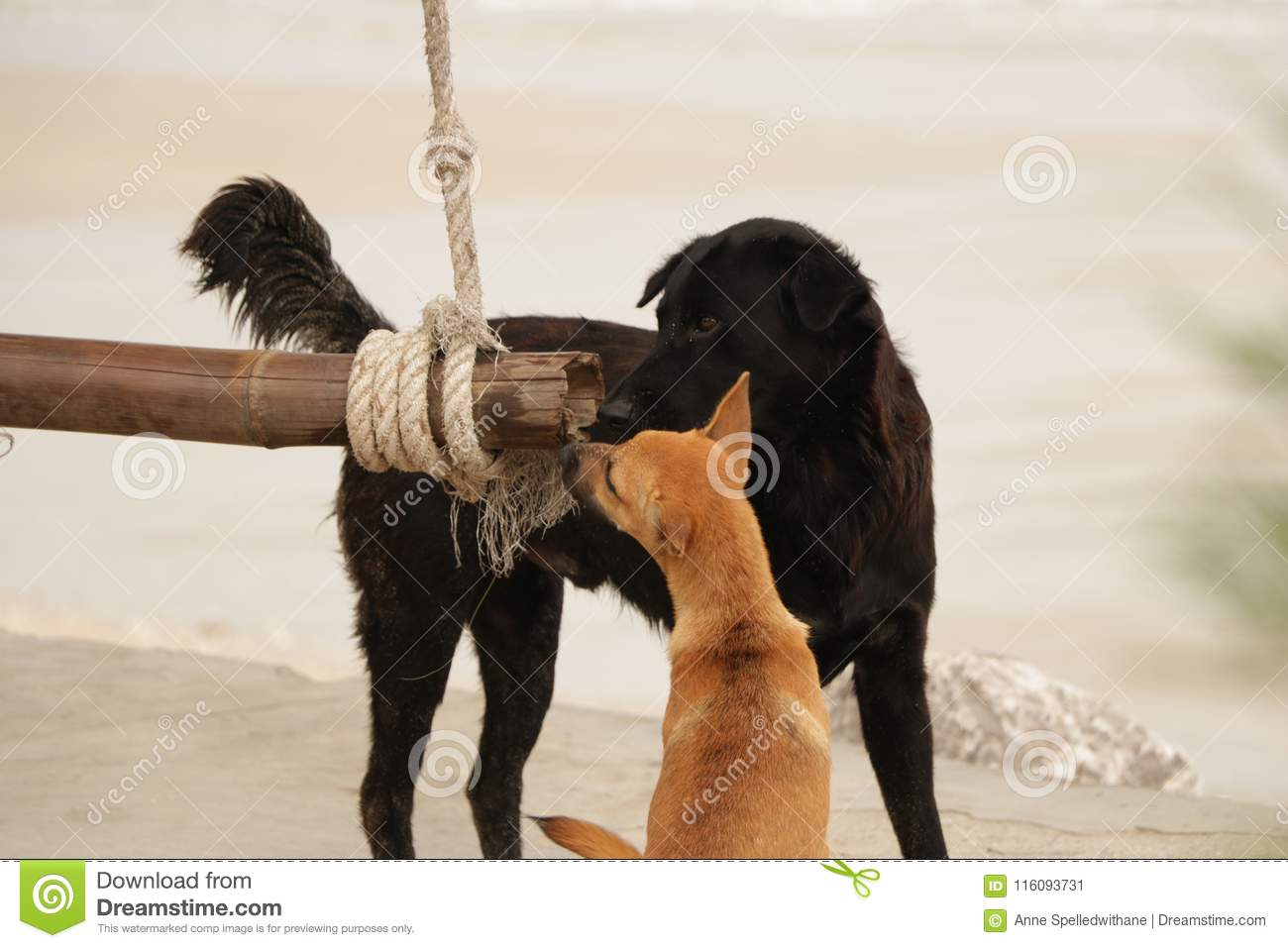 Dogs Sharing Wood Swing on the Beach