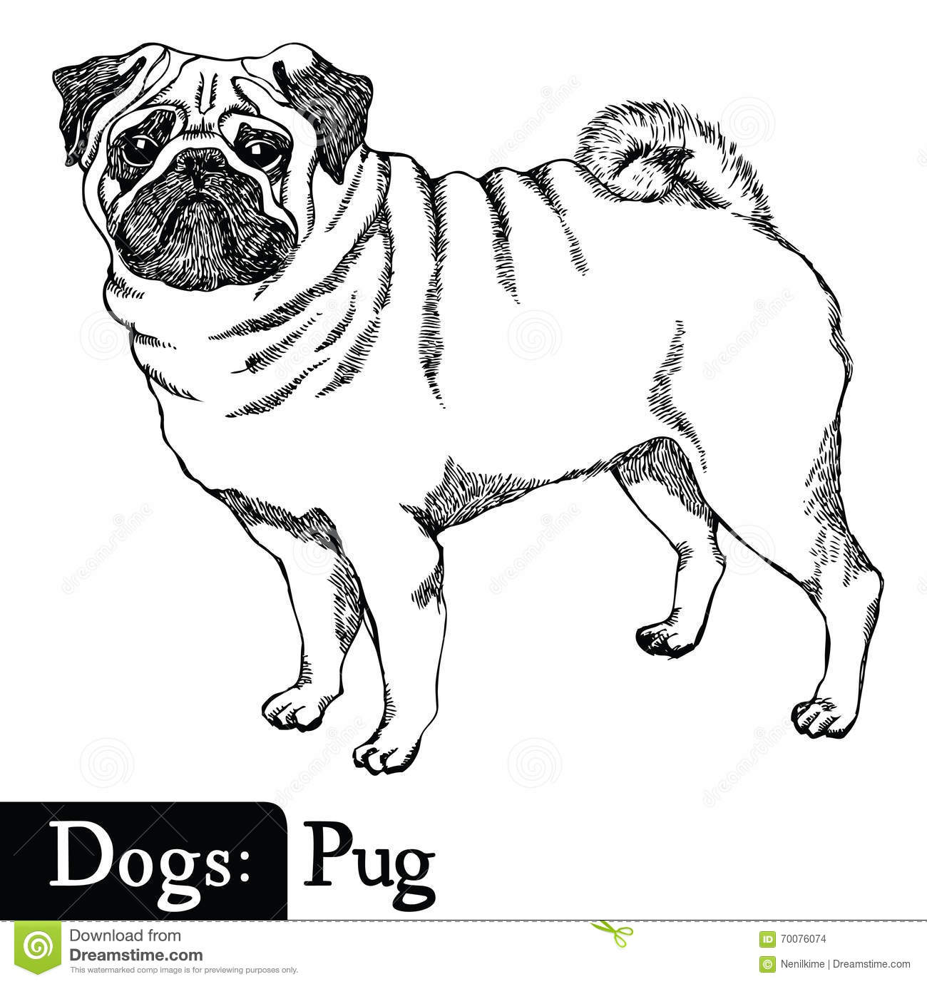 Dogs Sketch Style Pug Stock Vector