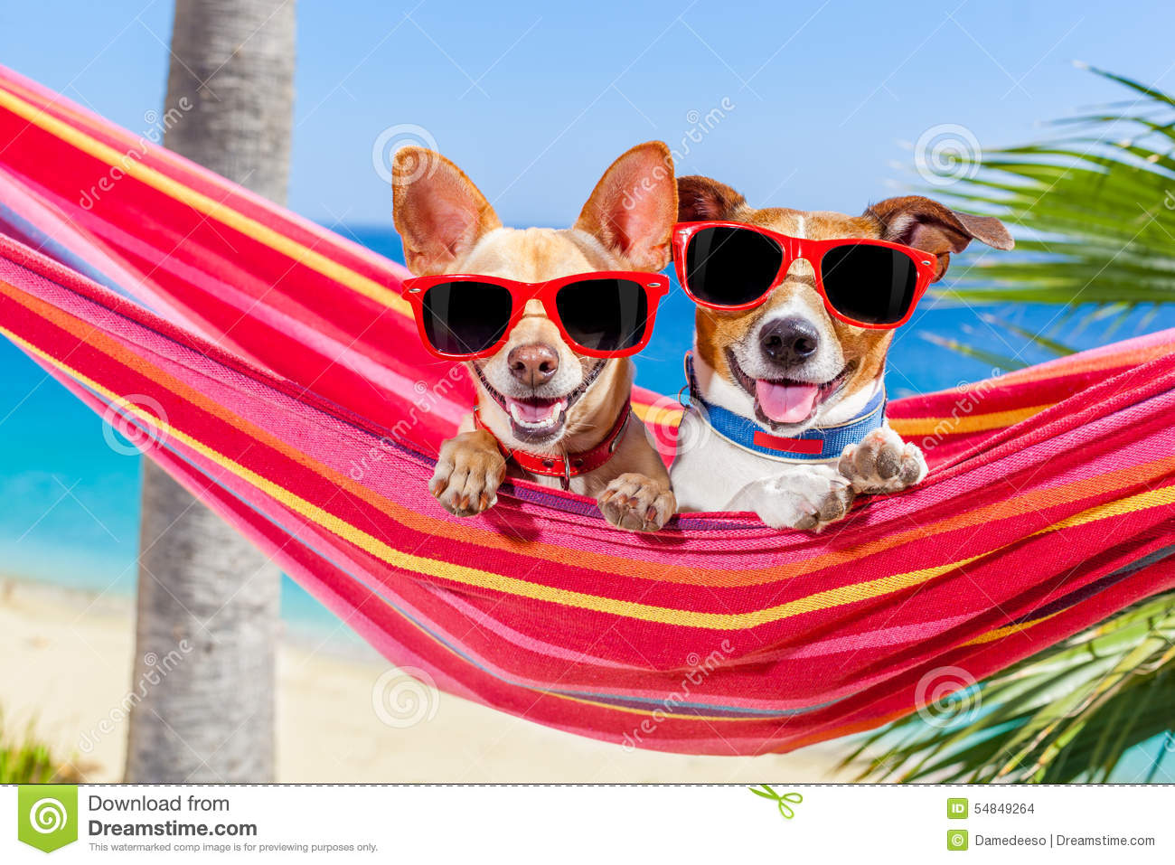 Dogs Summer Hammock Stock Photo Image Of Lounger