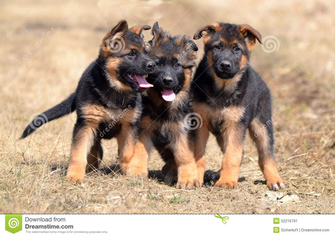 Dogs 00011