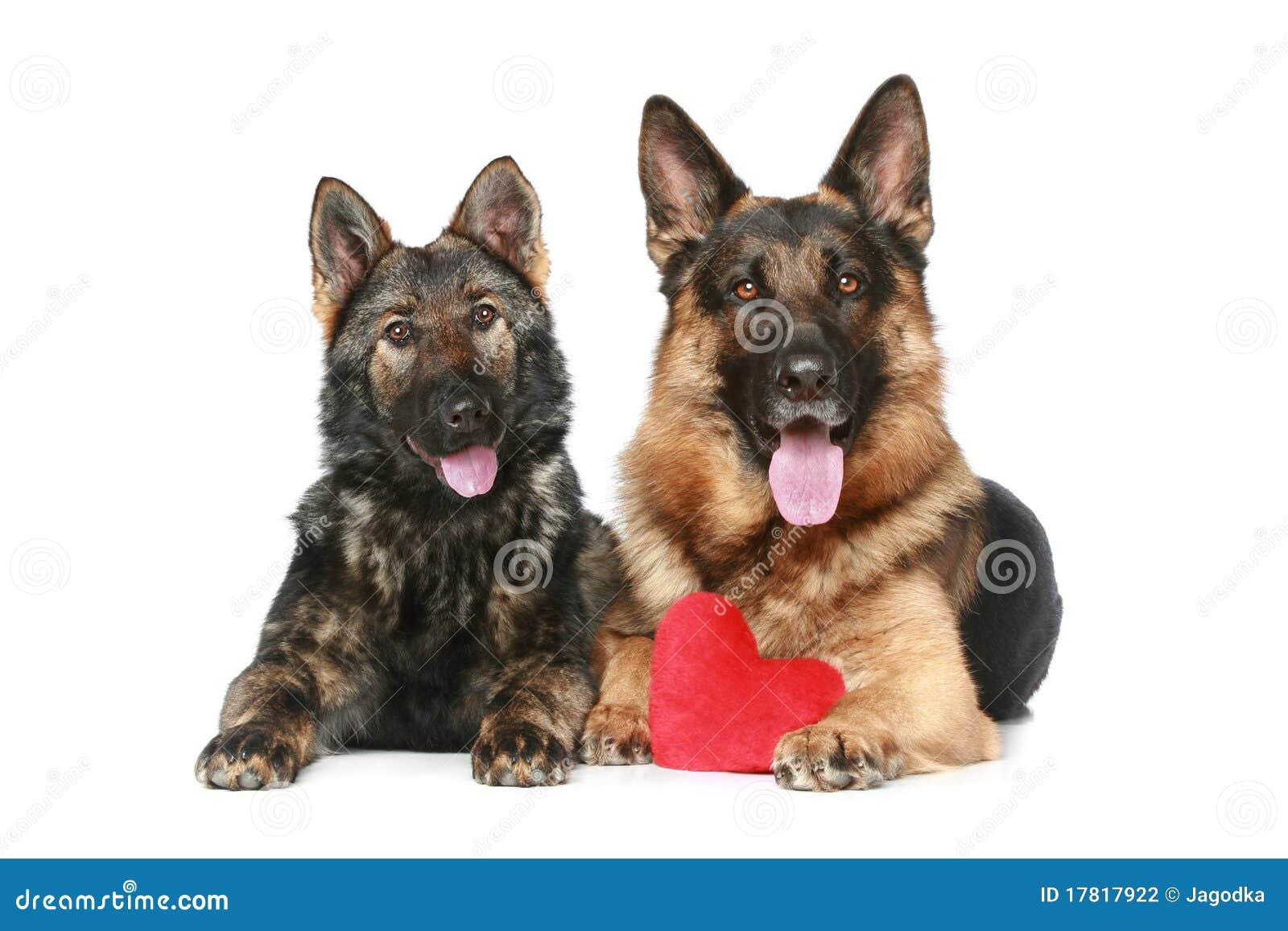 Dogs valentinen för herde två för tysk hjärta den röda