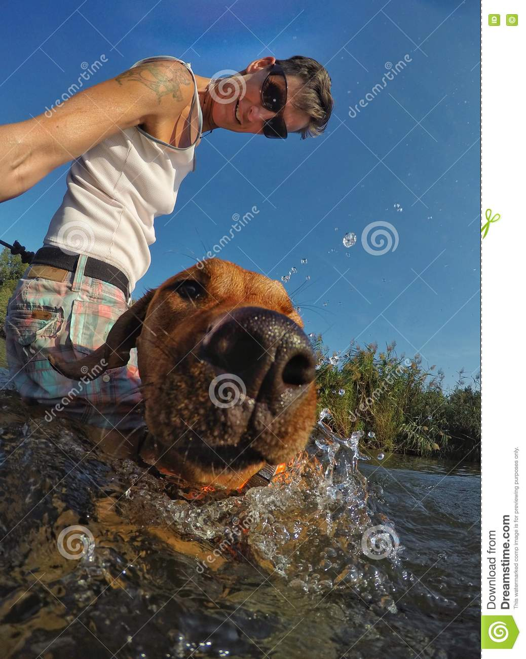 Dogs view out of the water