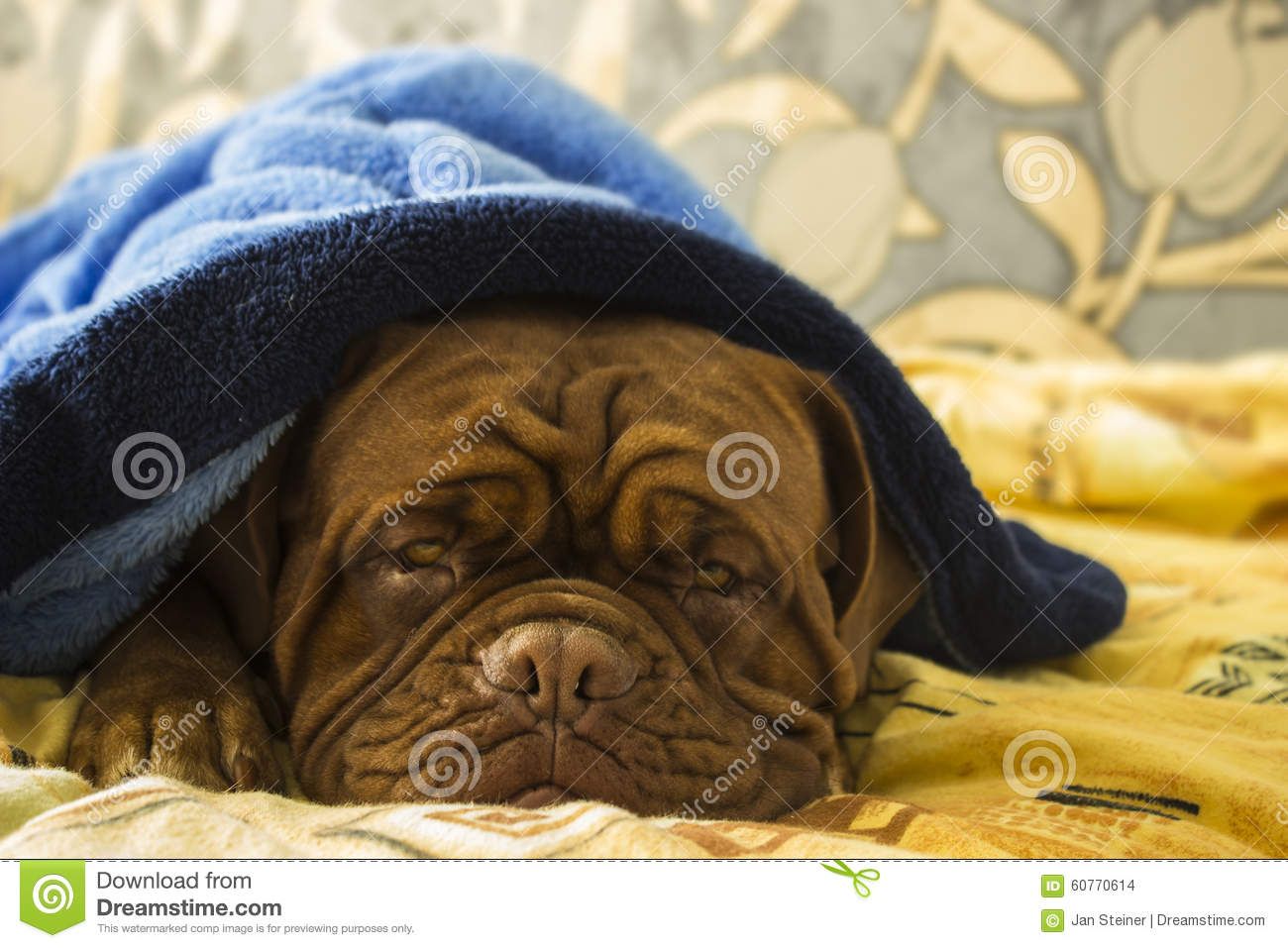 Dogue de Bordeaux en una cama