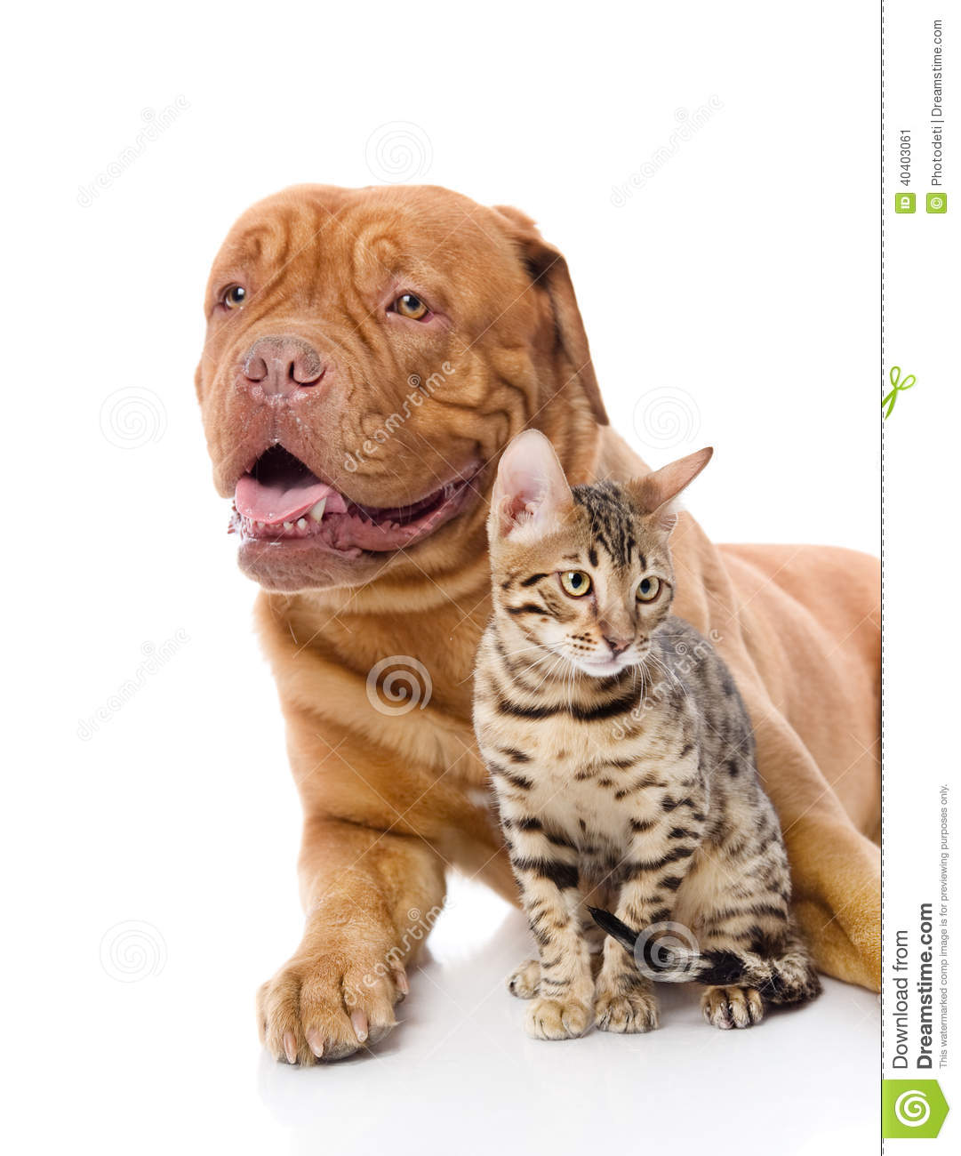 dogue chat Make dogcom your source for dog supplies & accessories shop today for dog crates, beds, toys & treats at low everyday prices.