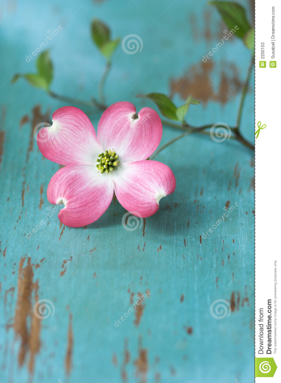 Dogwood Flower On Table Stock Image Image Of Leaves Table 2200153