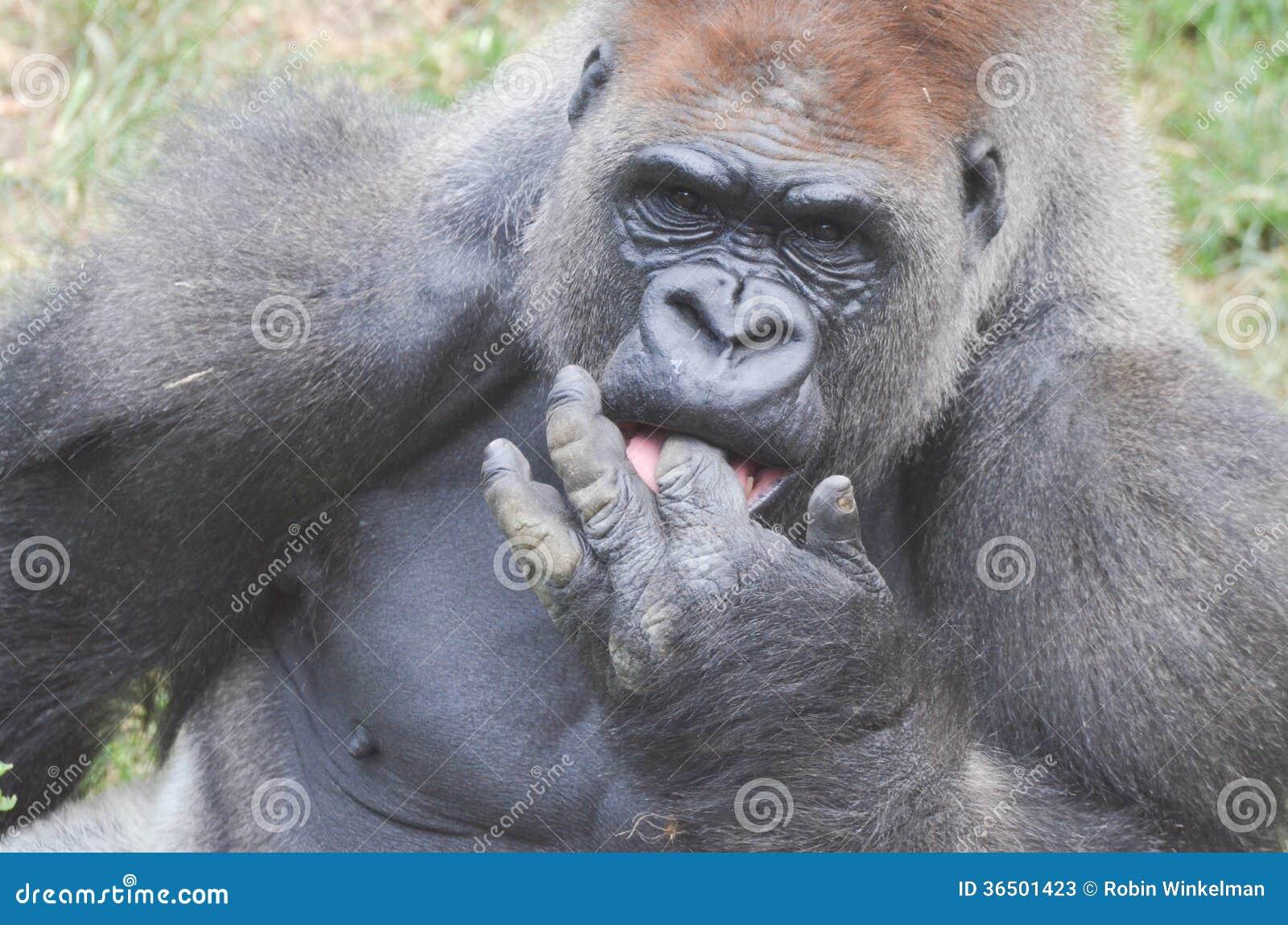 Doigts de gorille