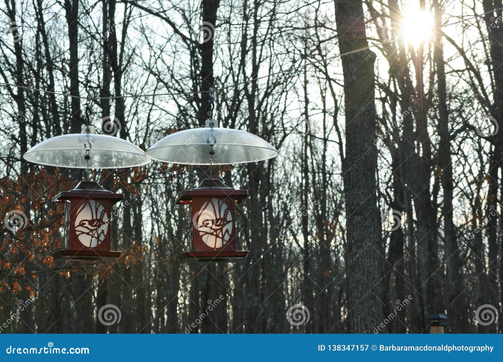 Dois alimentadores do pássaro que penduram com protetores do esquilo