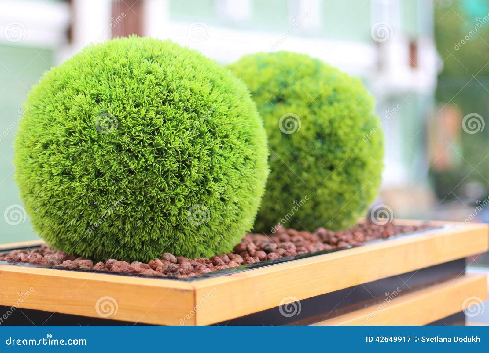 dois arbustos verdes decorativos na forma da bola no vaso