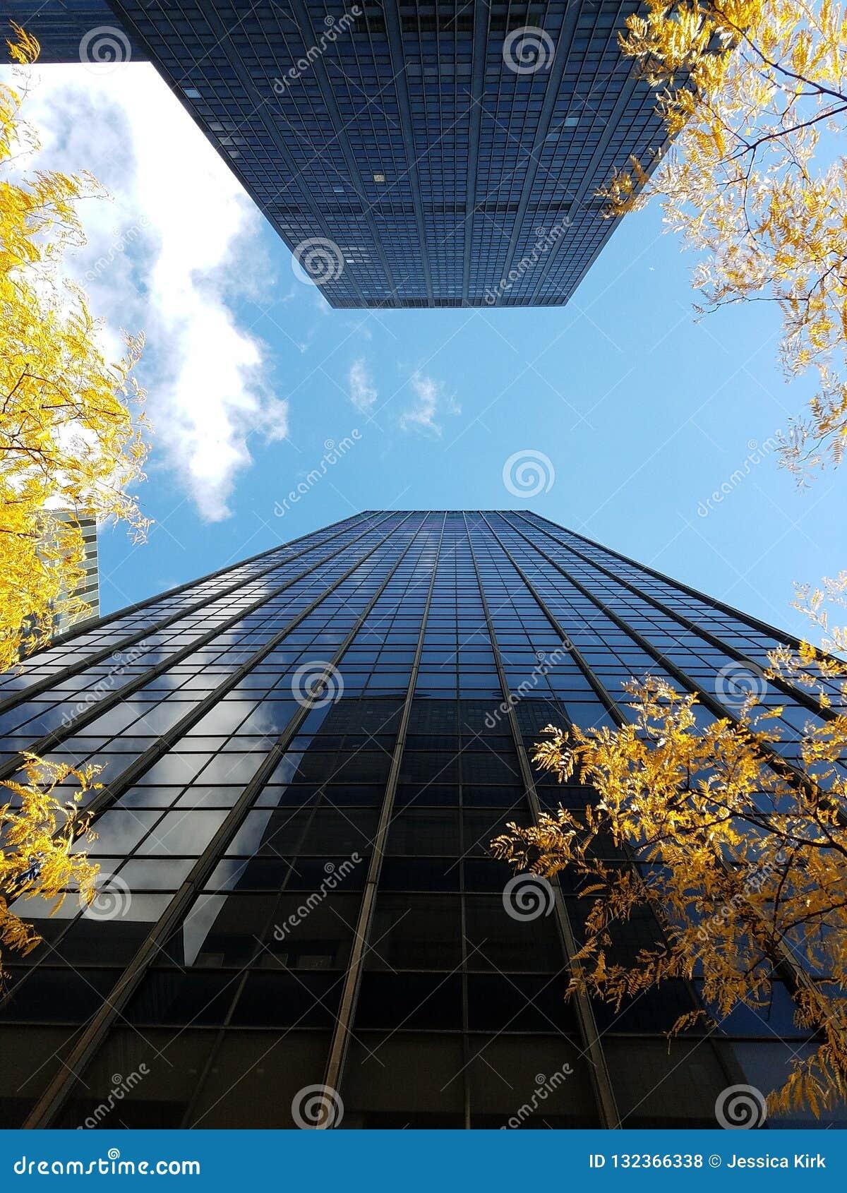 Dois arranha-céus enfrentando no Midtown com árvores amarelas