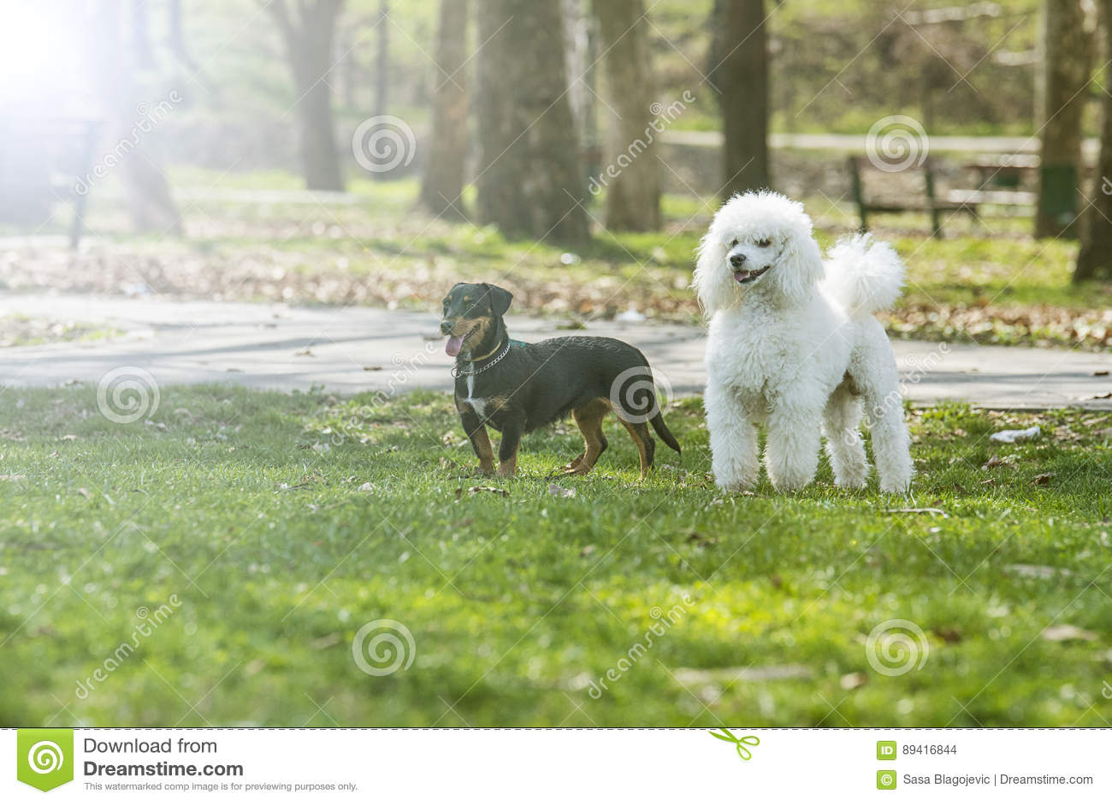 Dois cães bonitos