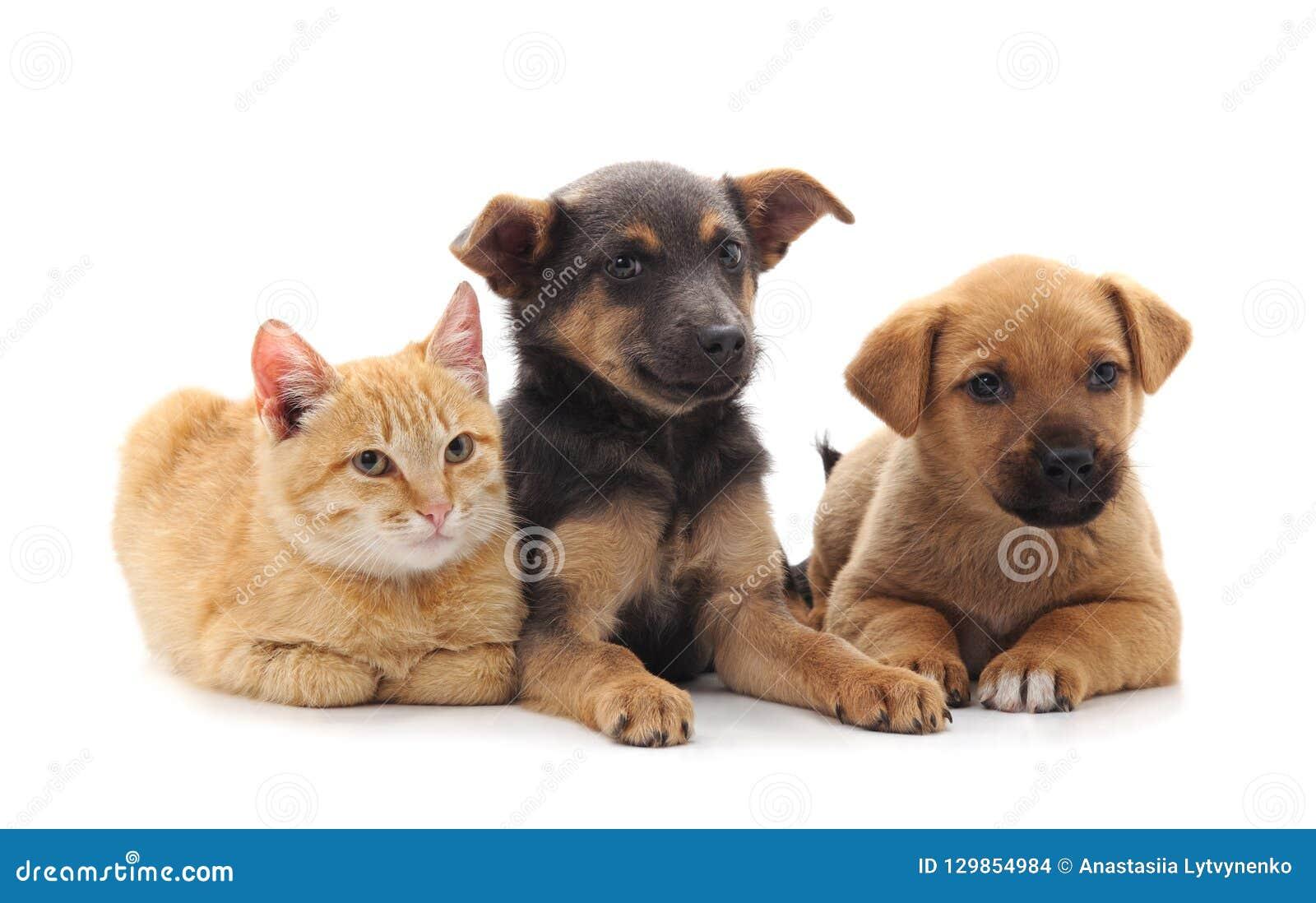 Dois cães e um gato