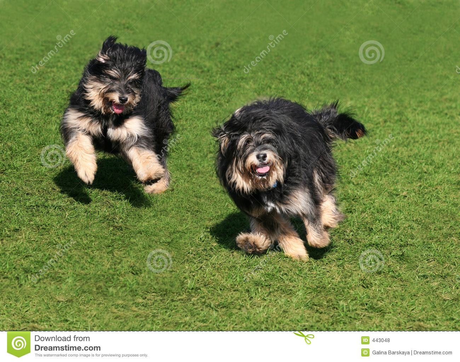 Dois cães felizes