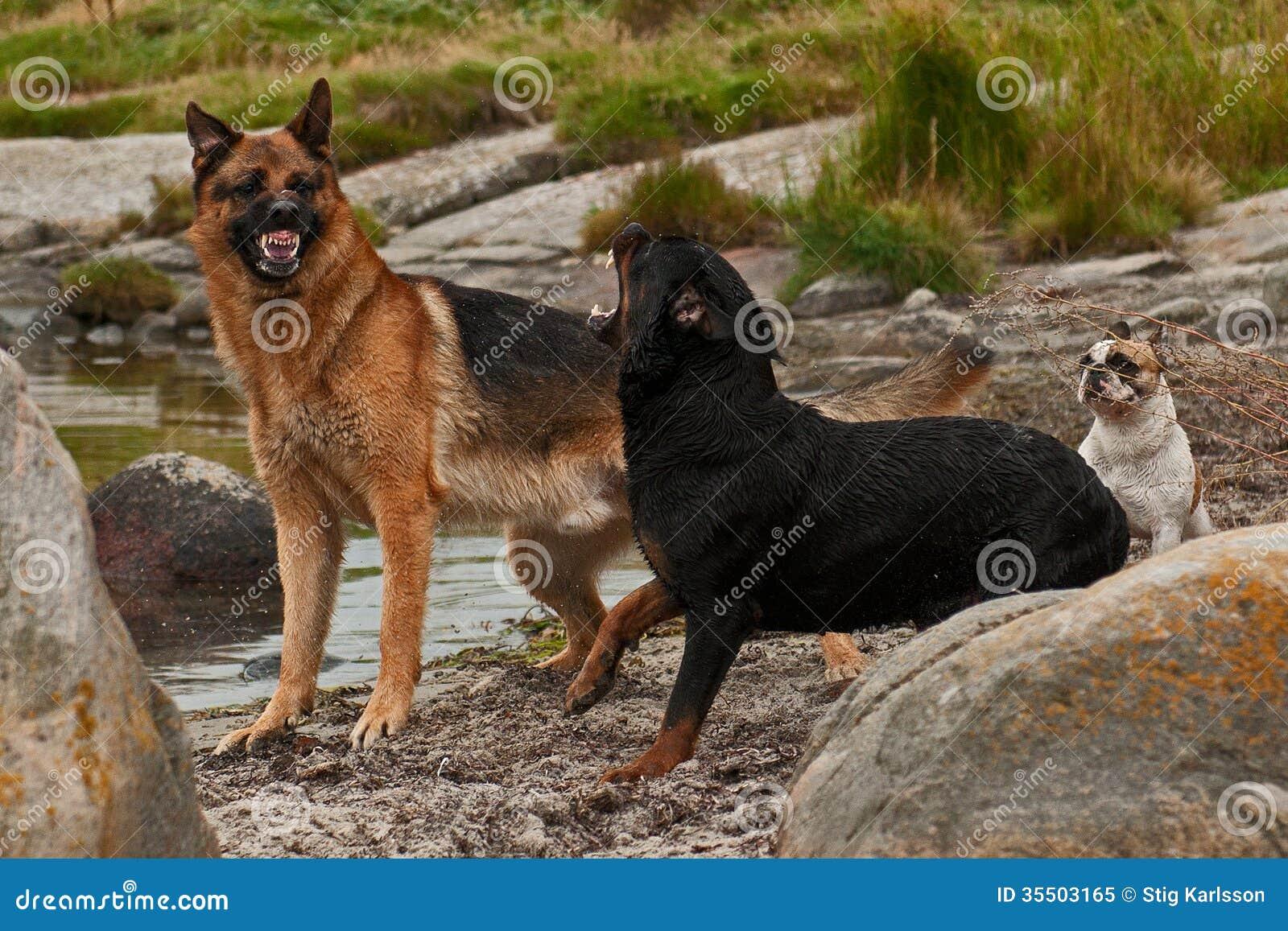 Dois cães incomodados por três 3