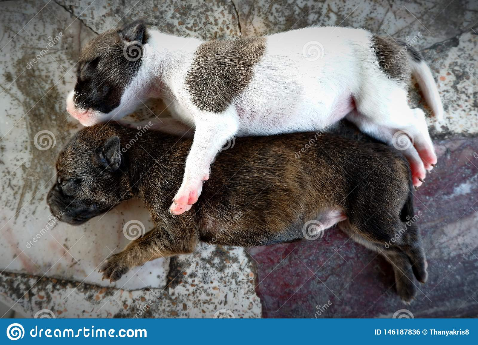 Dois cachorrinhos pequenos bonitos est?o dormindo