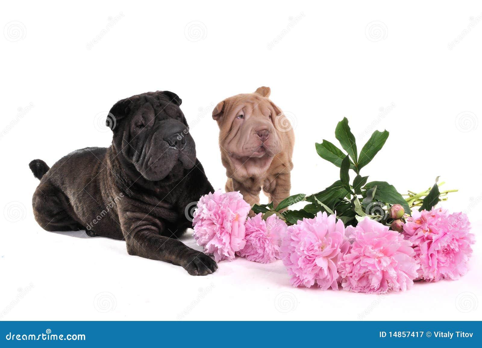 Dois Carbonizam-Pei com flores