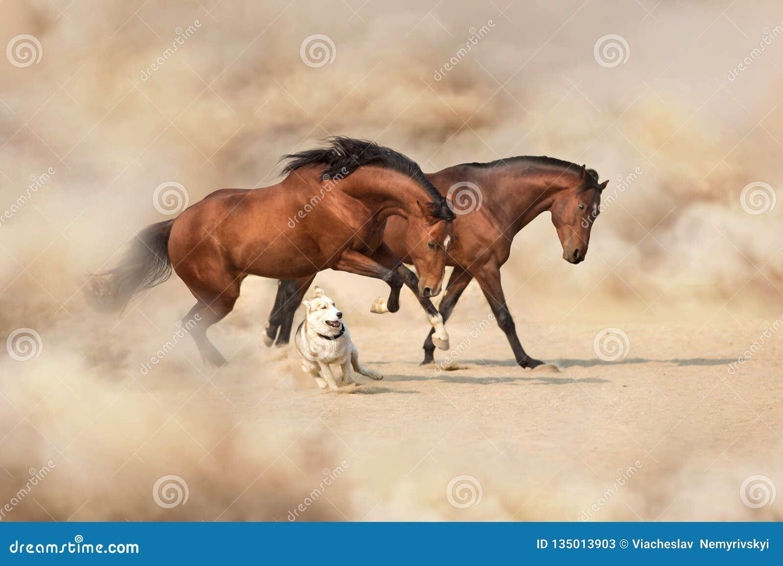 Dois cavalo e cão