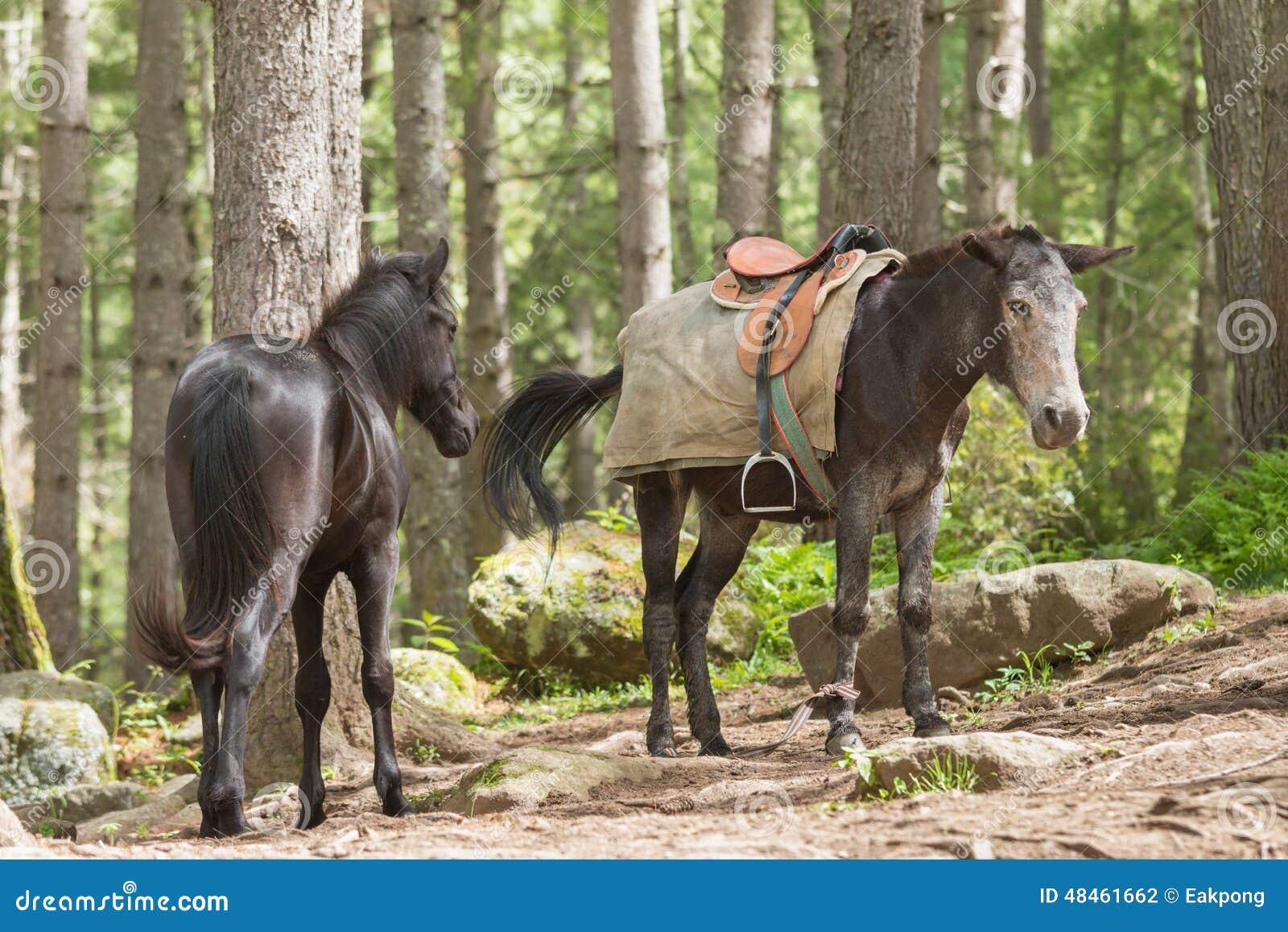 Dois cavalos na estrada ao monastério de Taktsang
