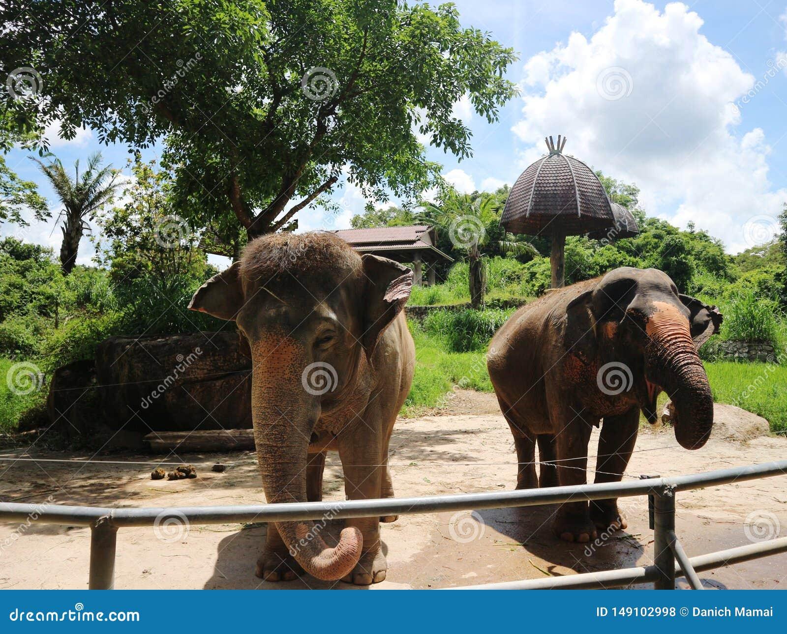 Dois elefantes no jardim zool?gico