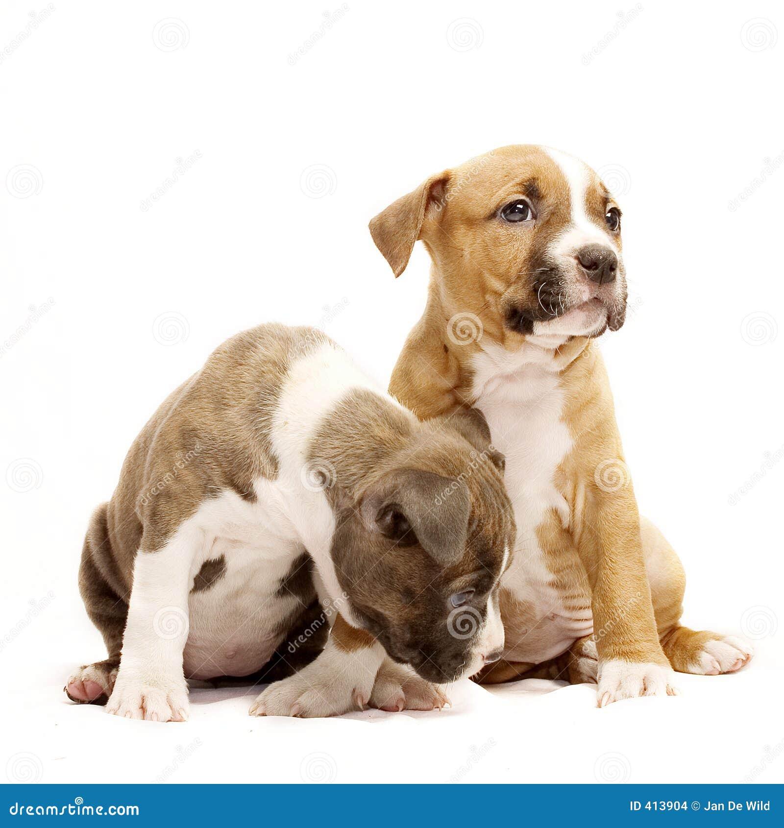 Dois filhotes de cachorro