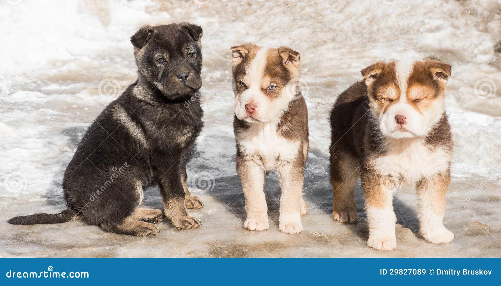 Filhote de cachorro pequeno na neve