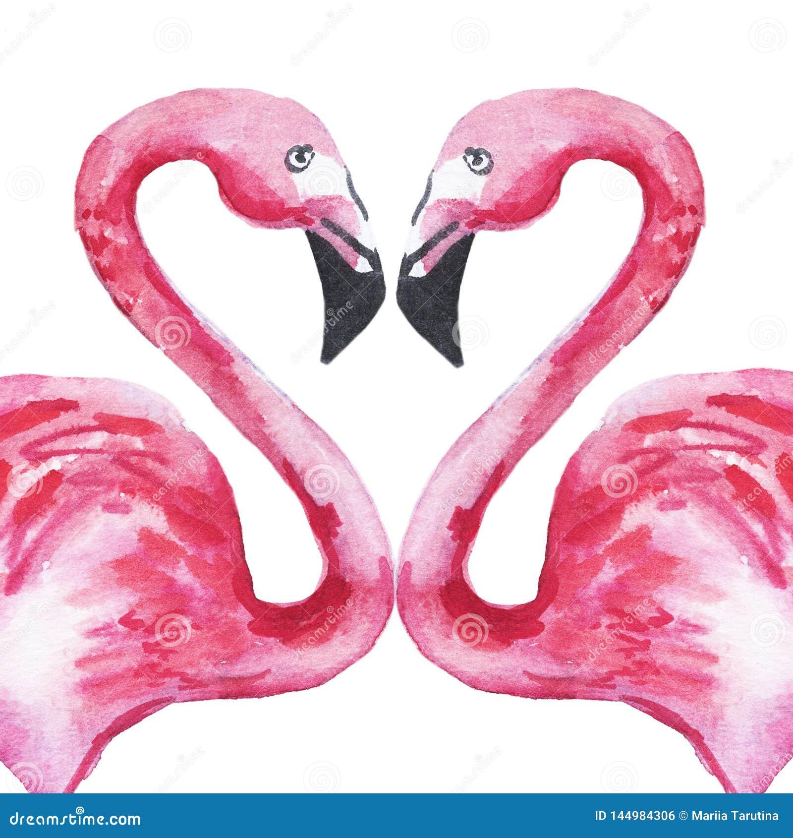 Dois flamingos cor-de-rosa no amor que forma um coração Ilustra??o da aguarela