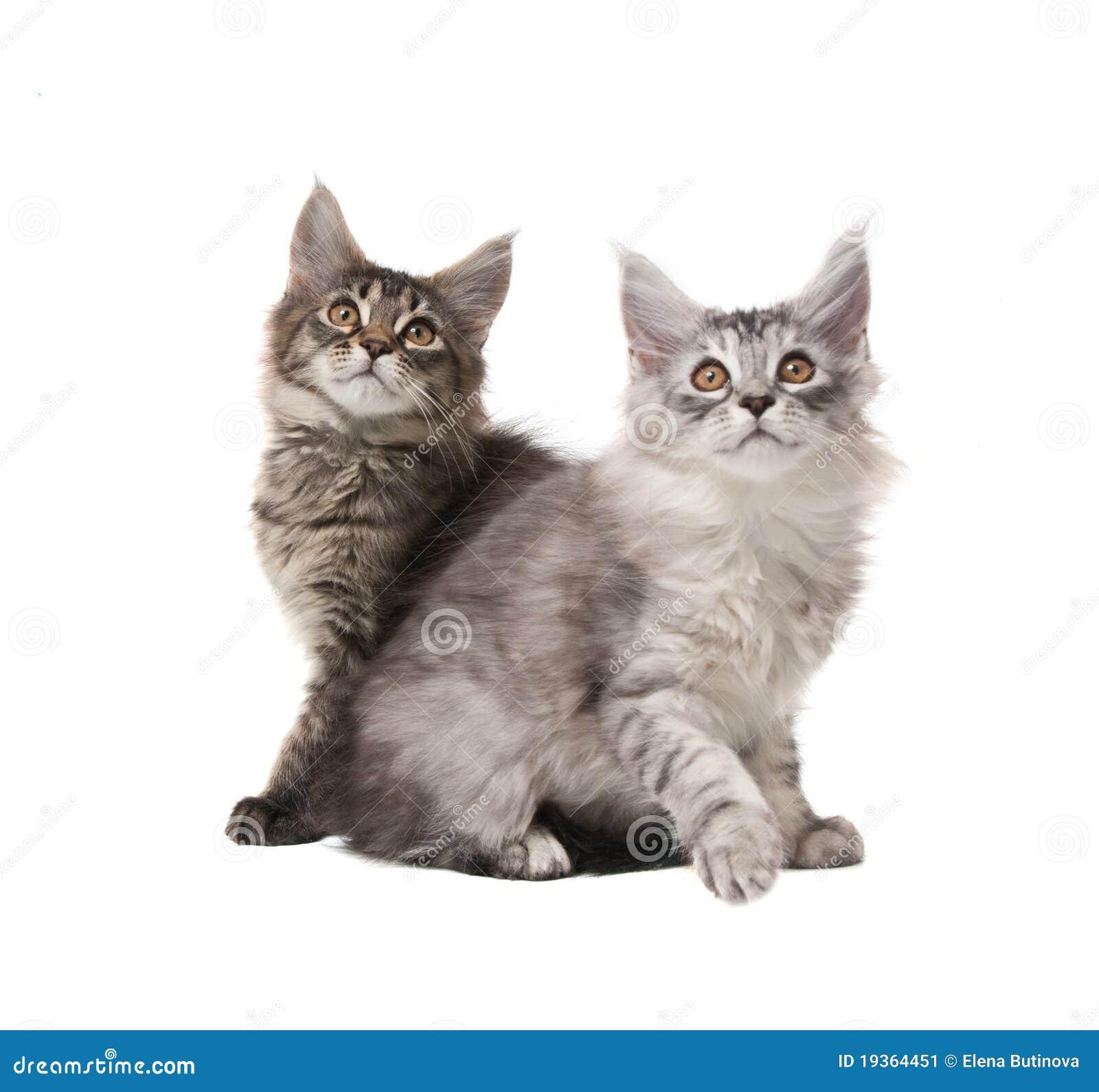 Dois gatinhos macios