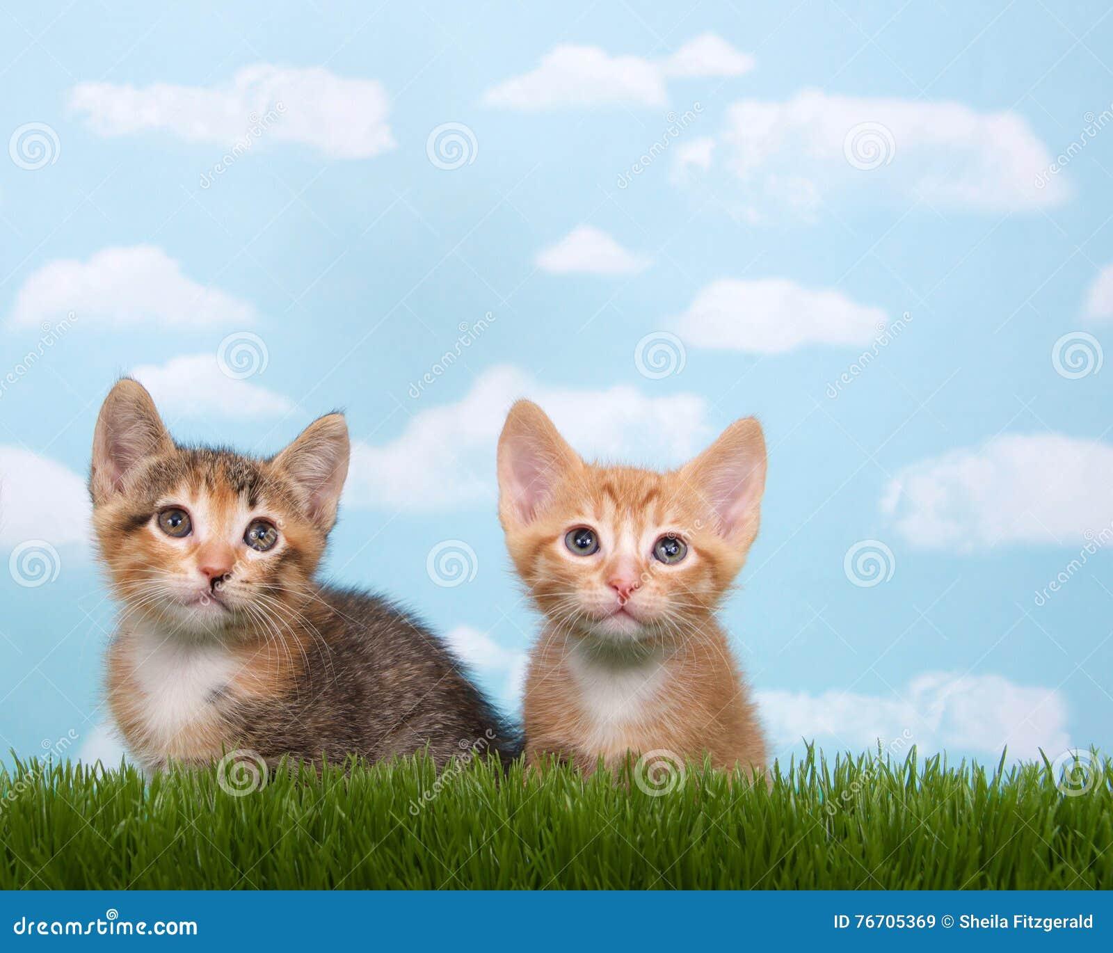 Dois gatinhos na grama alta com o macio branco do fundo do céu azul