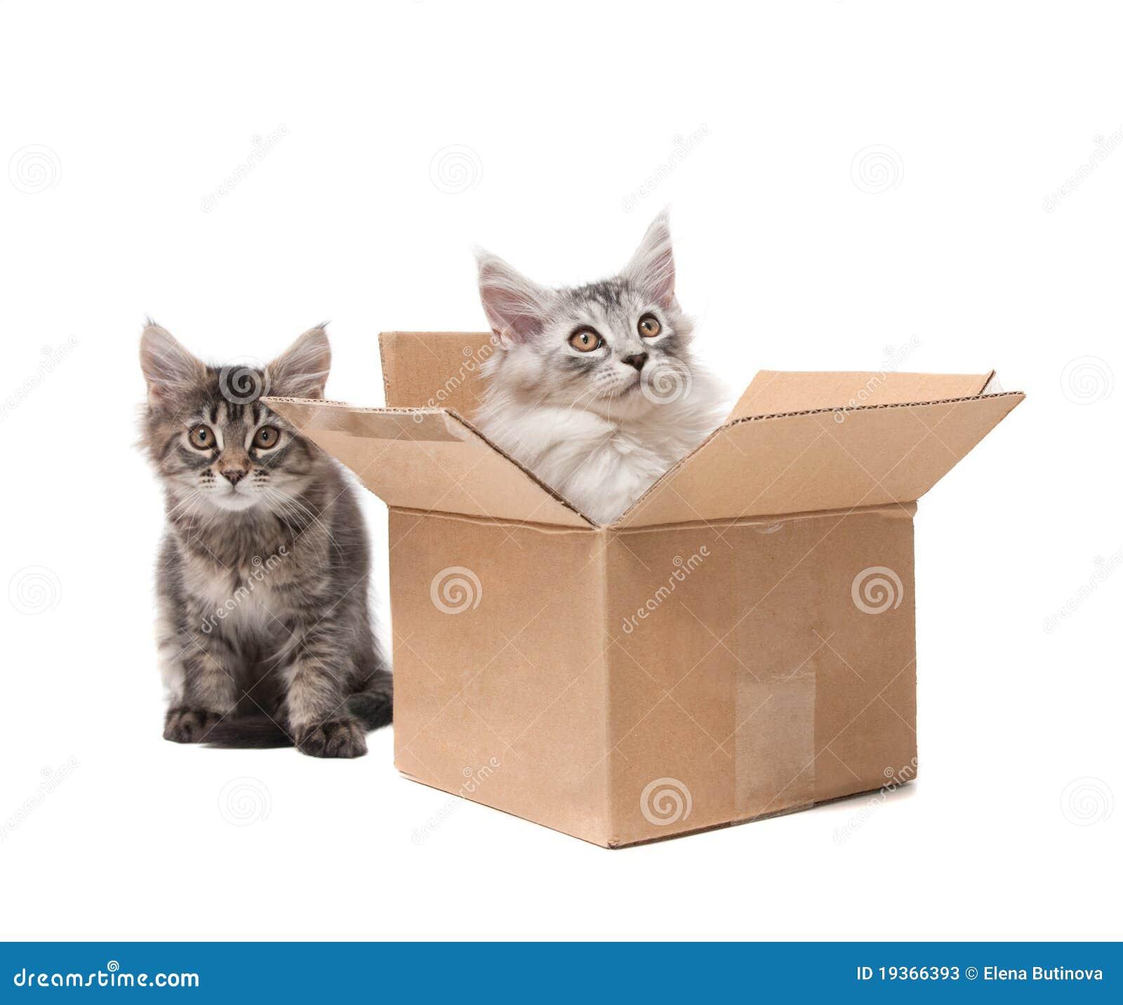 Dois gatinhos pequenos