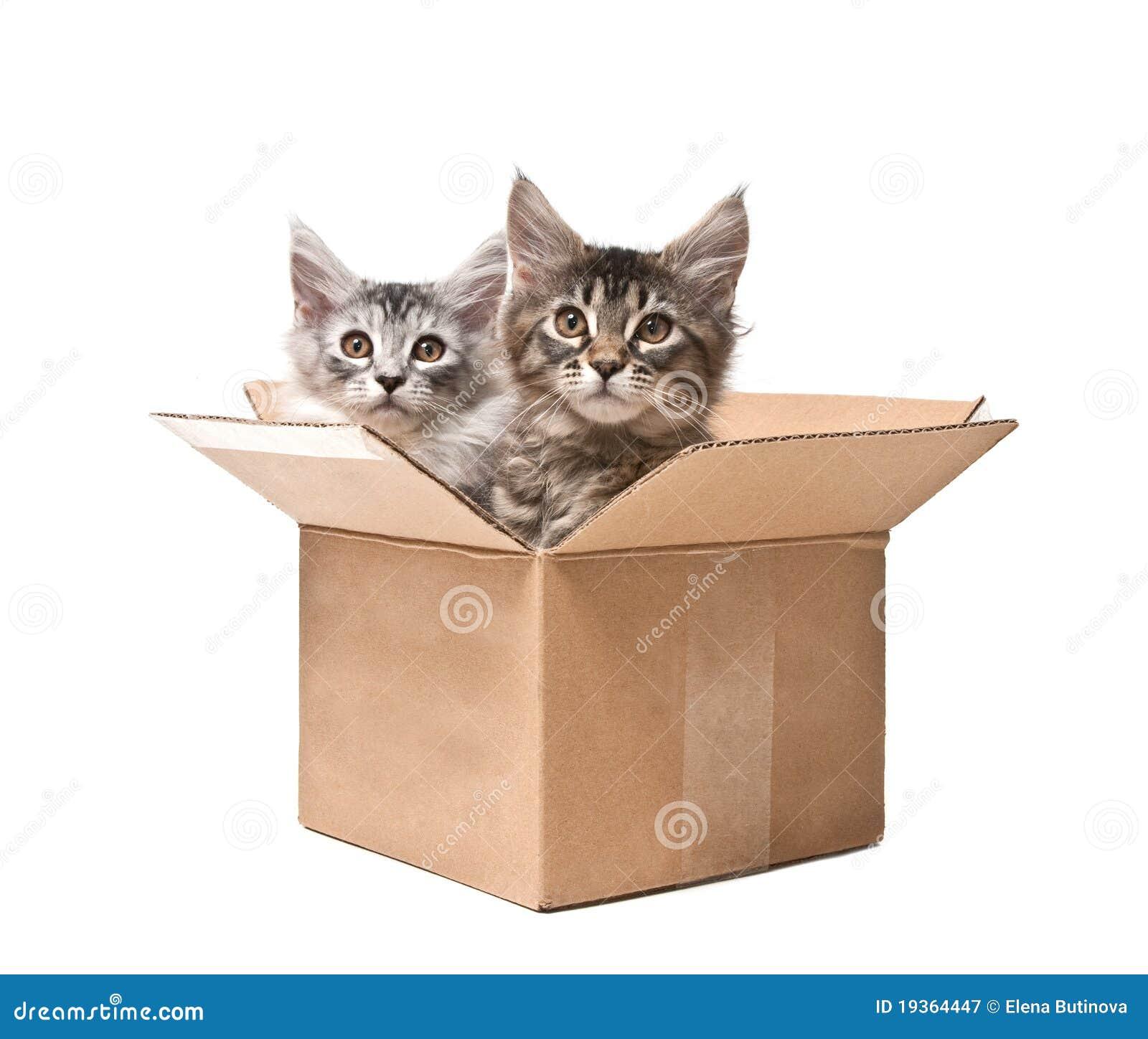 Dois gatinhos pequenos em uma caixa de cartão