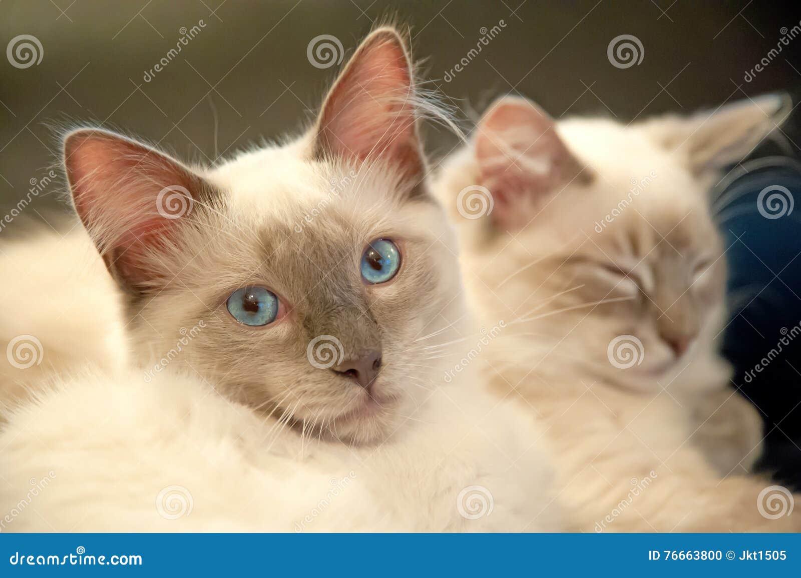 Dois gatos bonitos