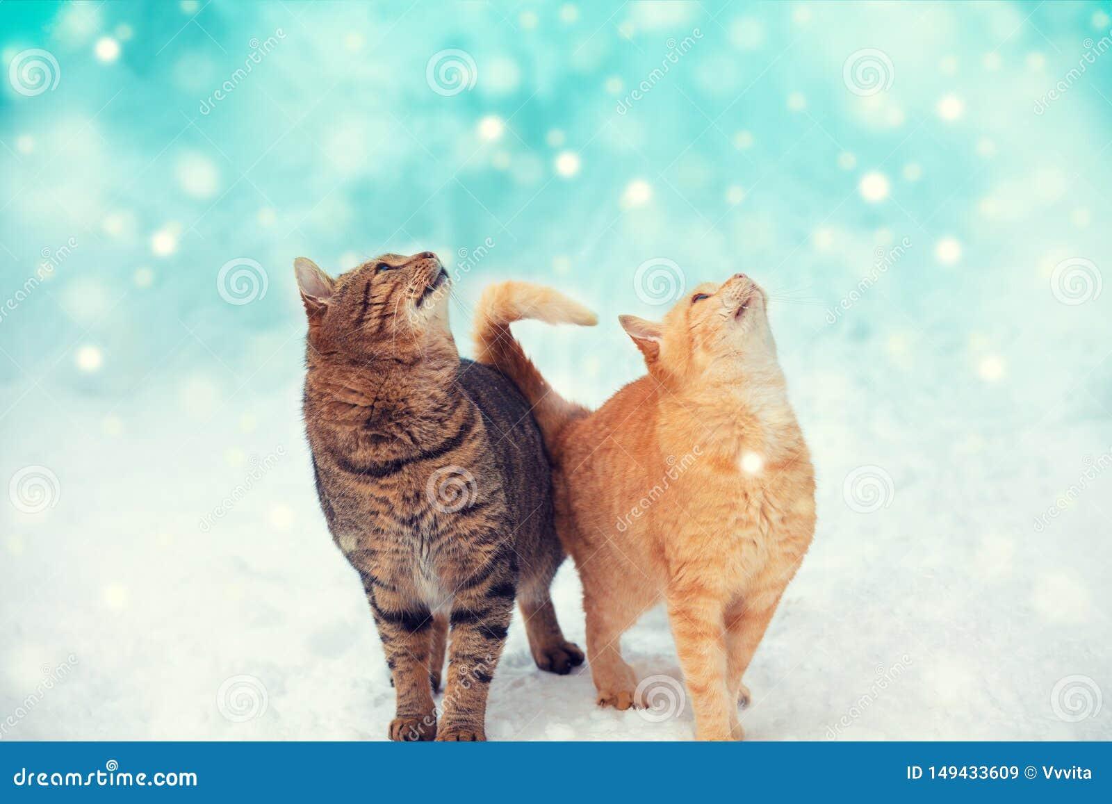 Dois gatos est?o andando na neve