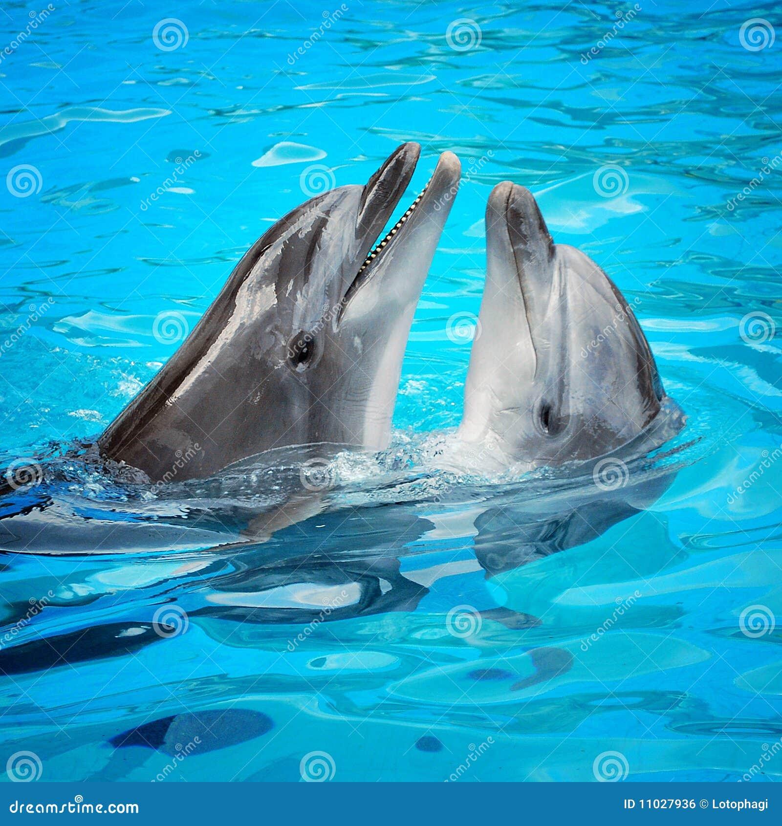 Dois golfinhos