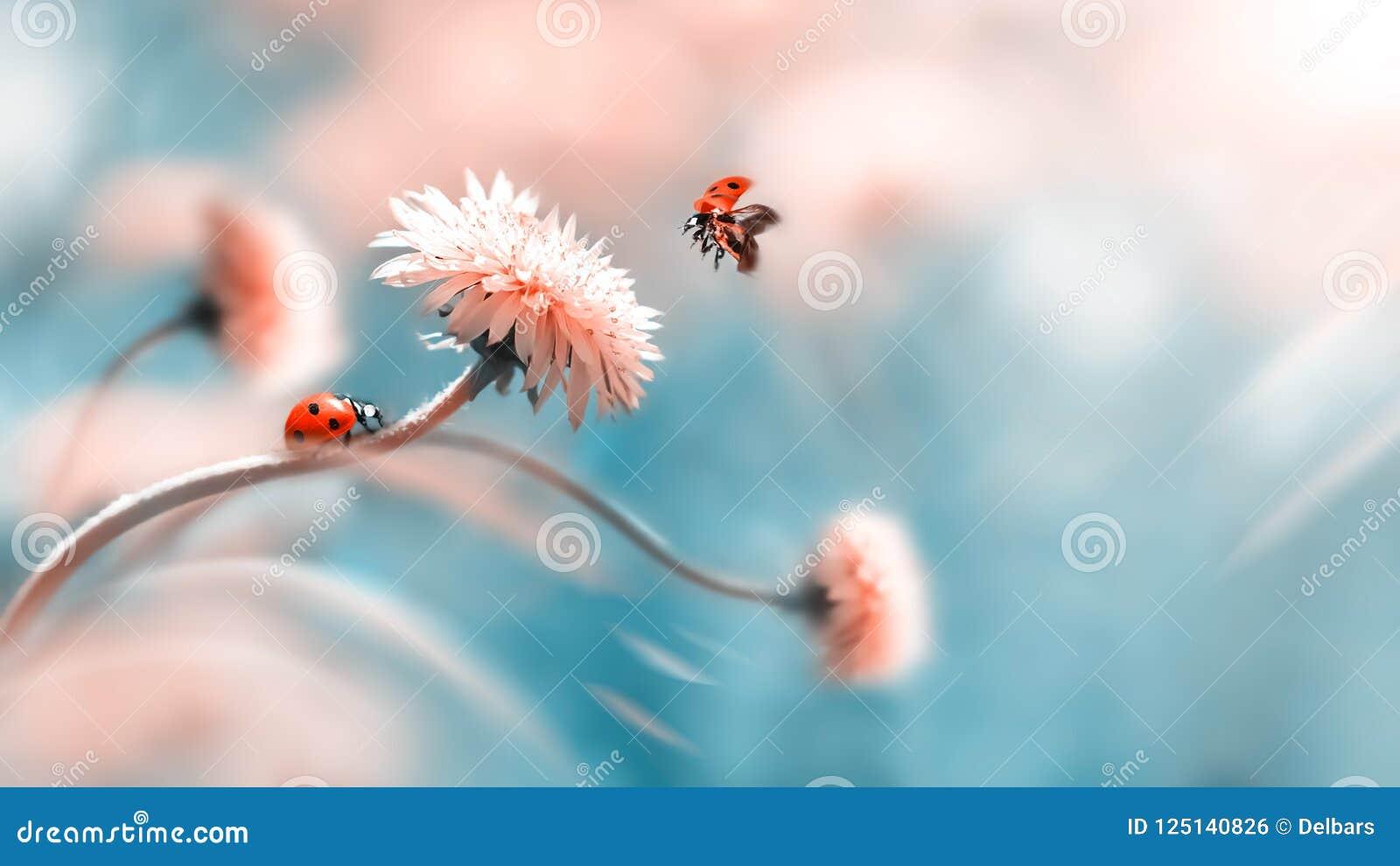Dois joaninhas em uma flor alaranjada da mola Voo de um inseto Imagem macro artística verão da mola do conceito