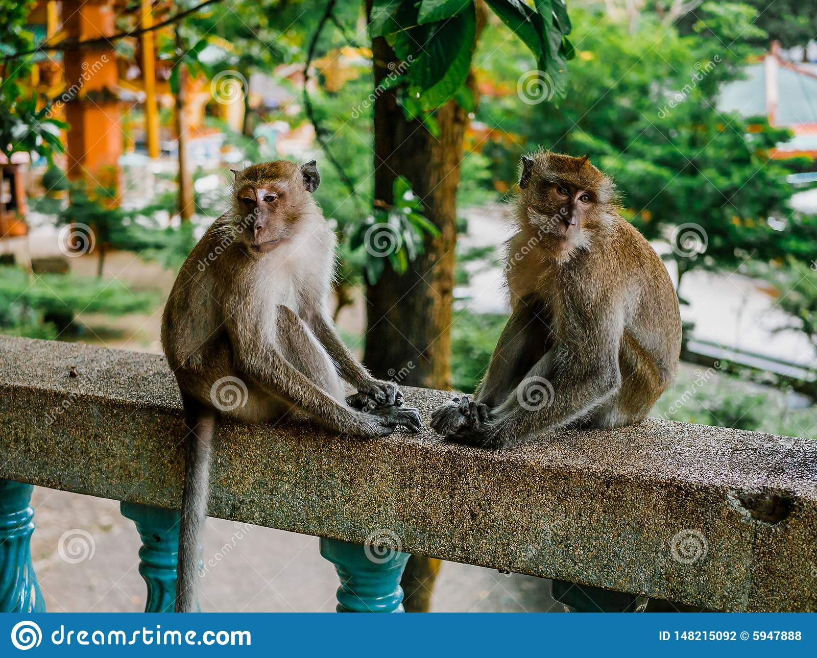 Dois macacos tristes