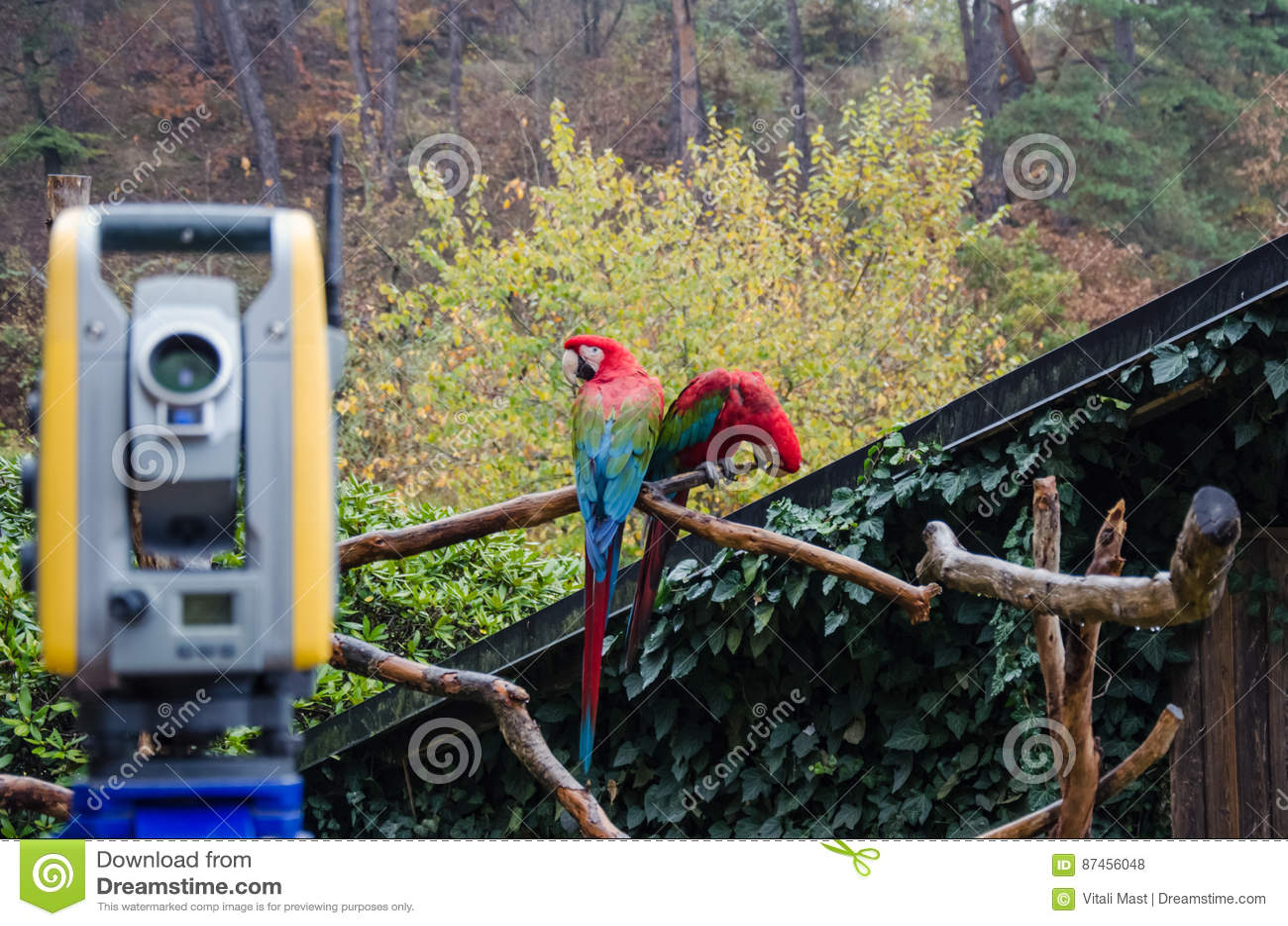 Dois papagaios