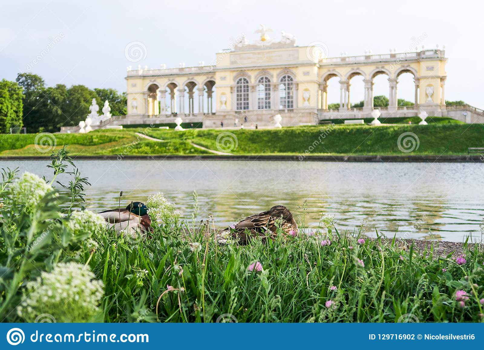 Dois patos bonitos que relaxam na frente de Kleine Gloriette em Schön