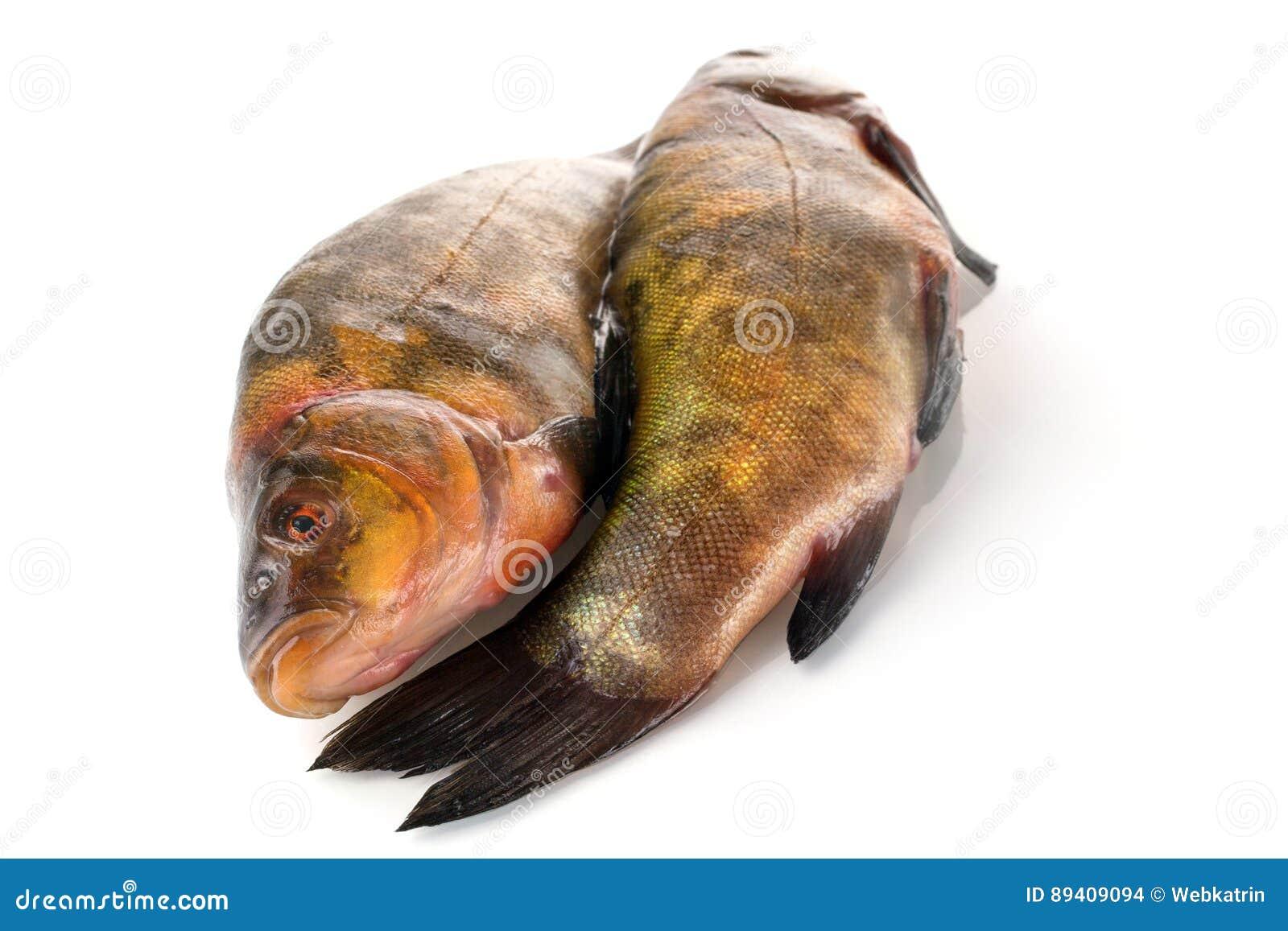 Dois peixes crus frescos em um fundo branco