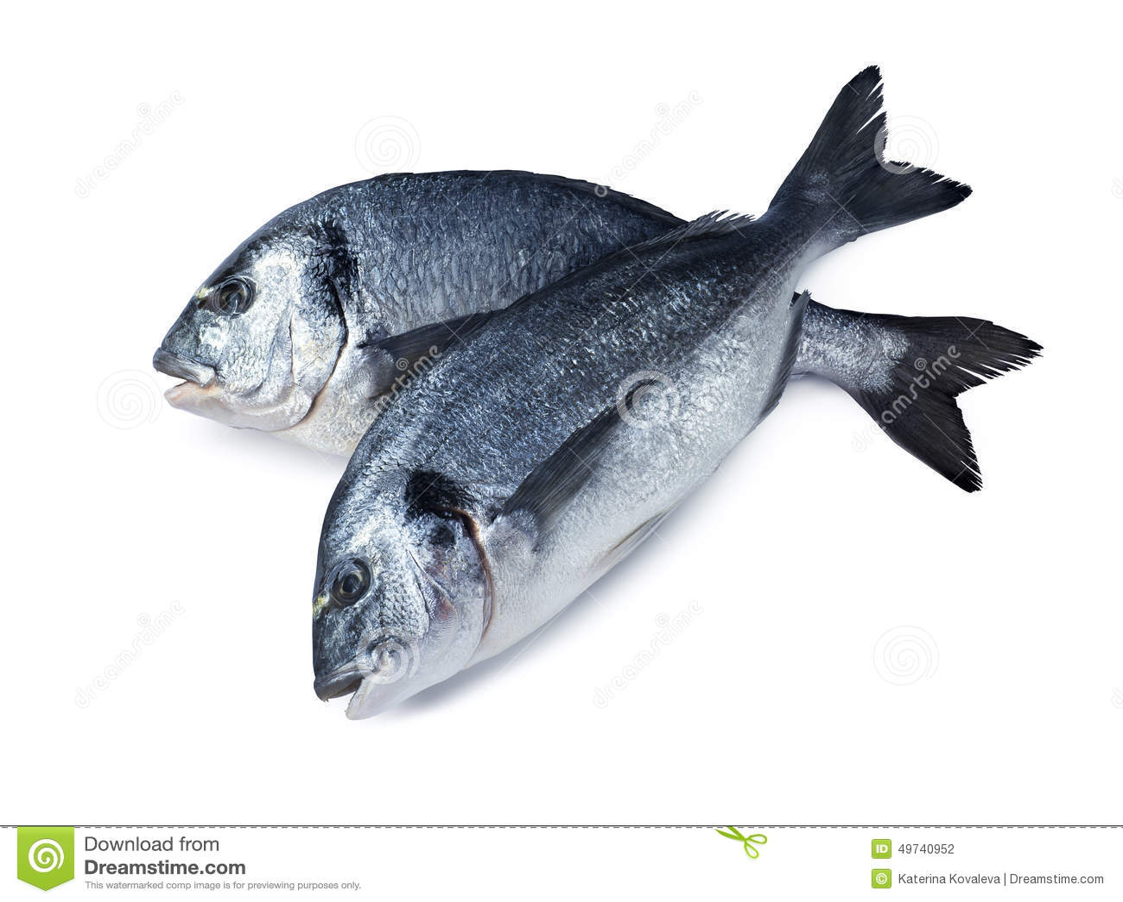 Dois peixes do dorado cruzados isolados no fundo branco