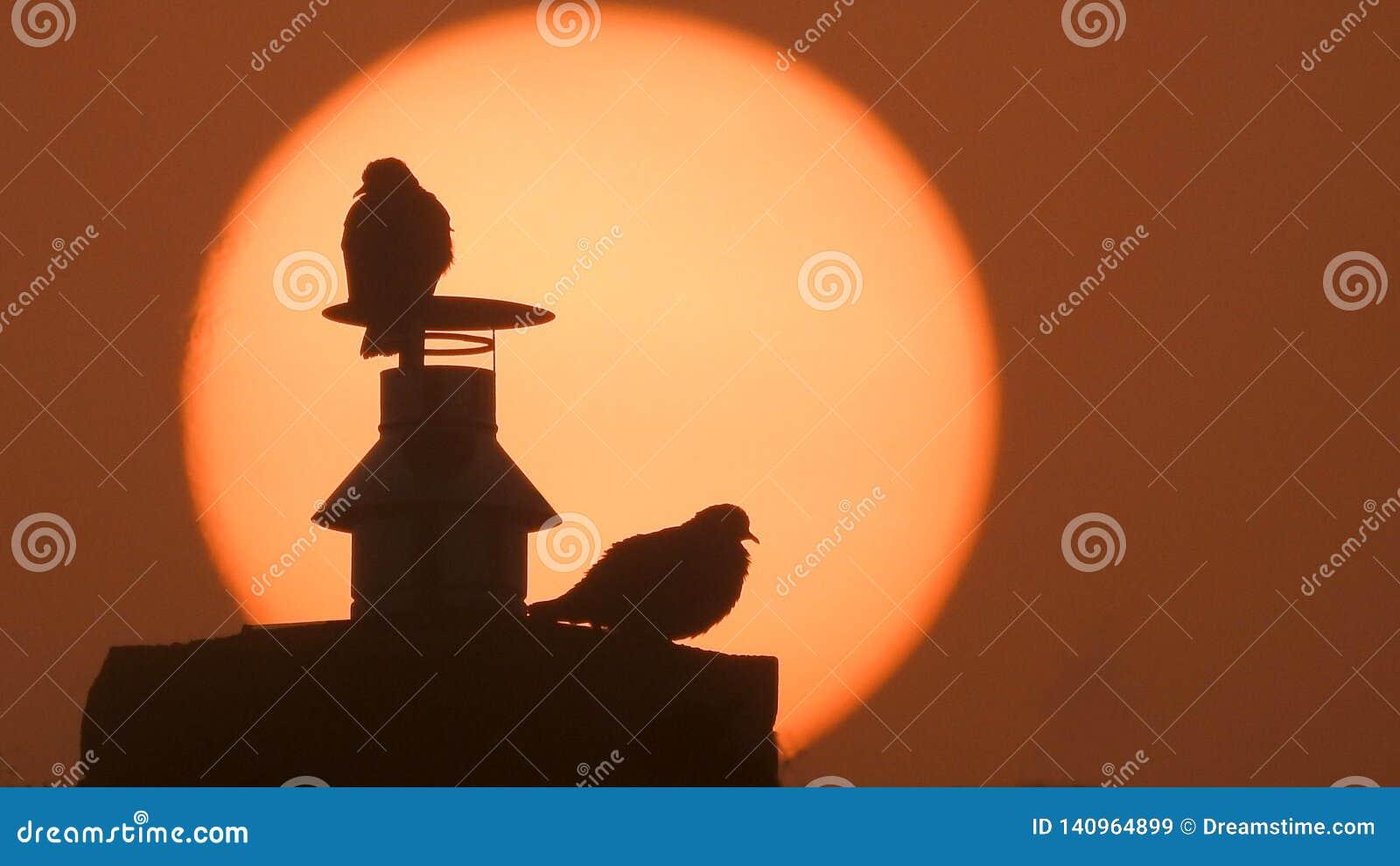 Dois pombos em uma chaminé com um sol alaranjado grande da manhã no fundo