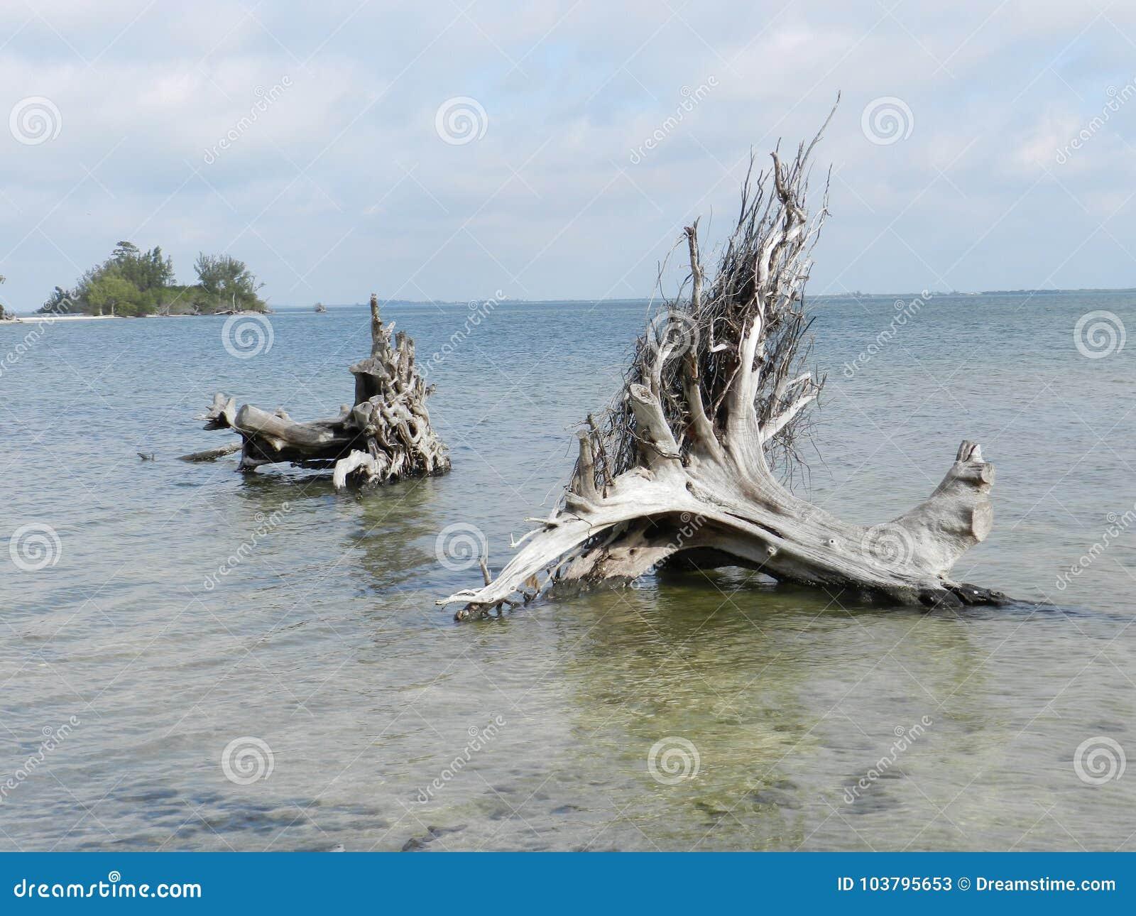 Dois troncos e raizes velhos de árvore caídos sobre no rio