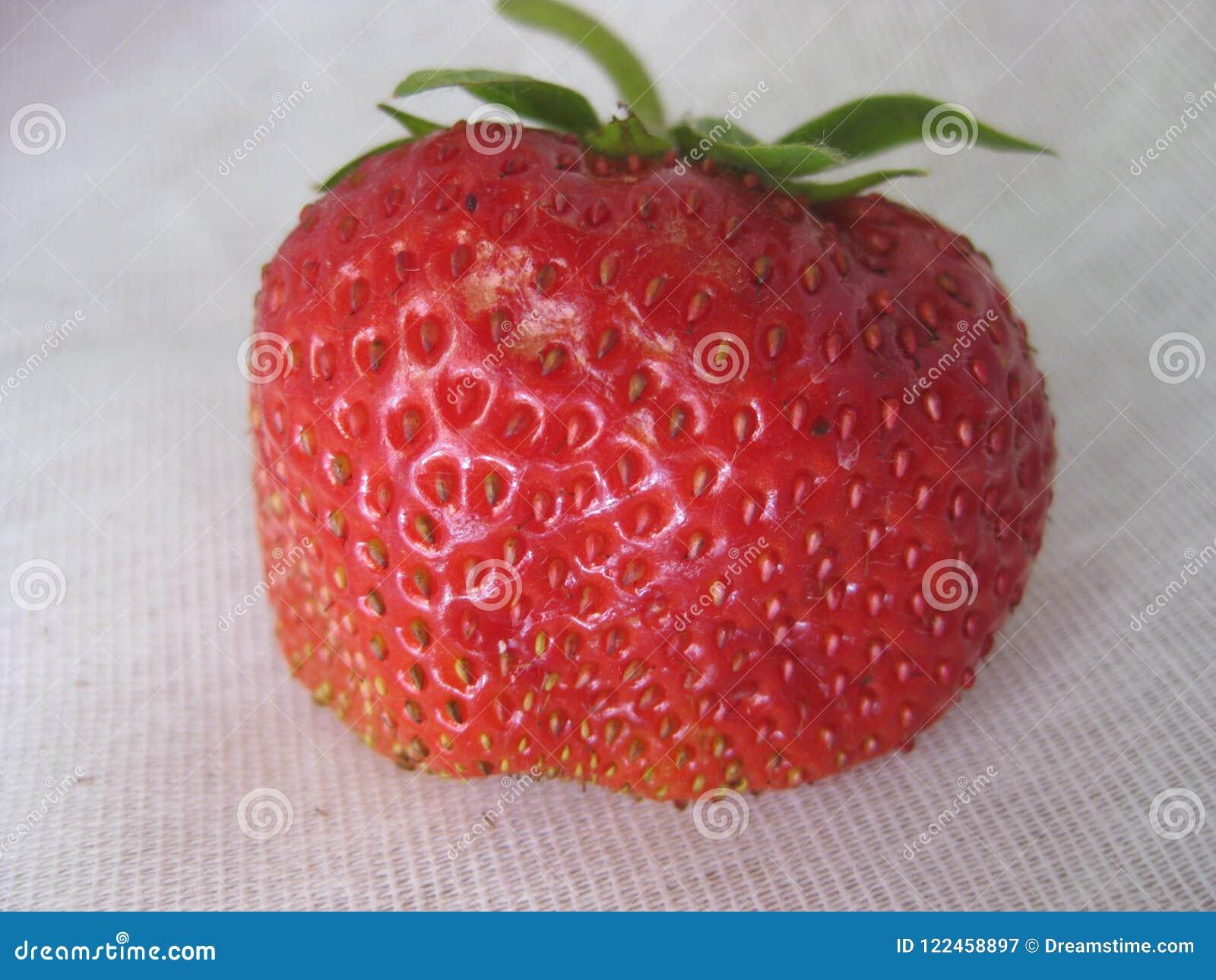 Dojrzały, czerwony truskawkowy zakończenie na białej kanwie,