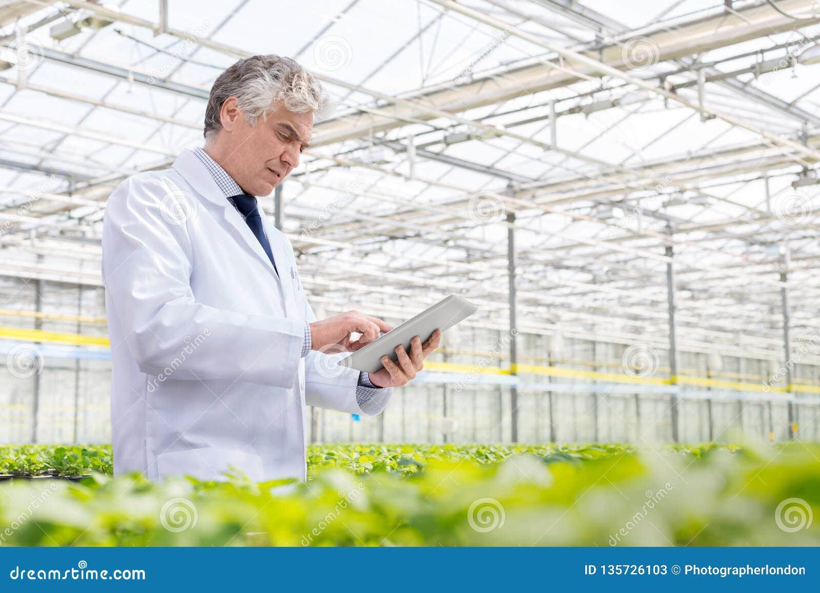 Dojrzały męski biochemik używa cyfrową pastylkę w rośliny pepinierze