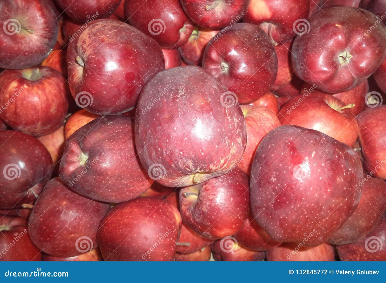 Dojrzali czerwoni jabłka nowy żniwo