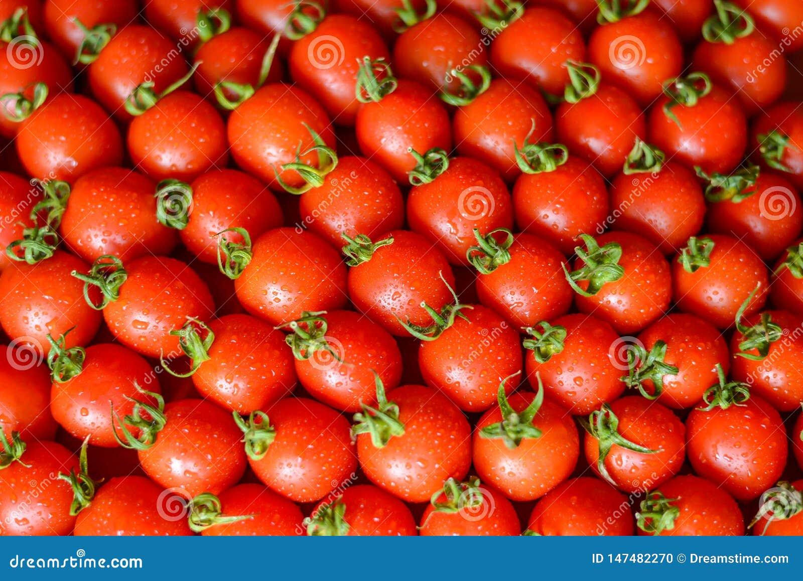 Dojrzali soczy?ci pomidory