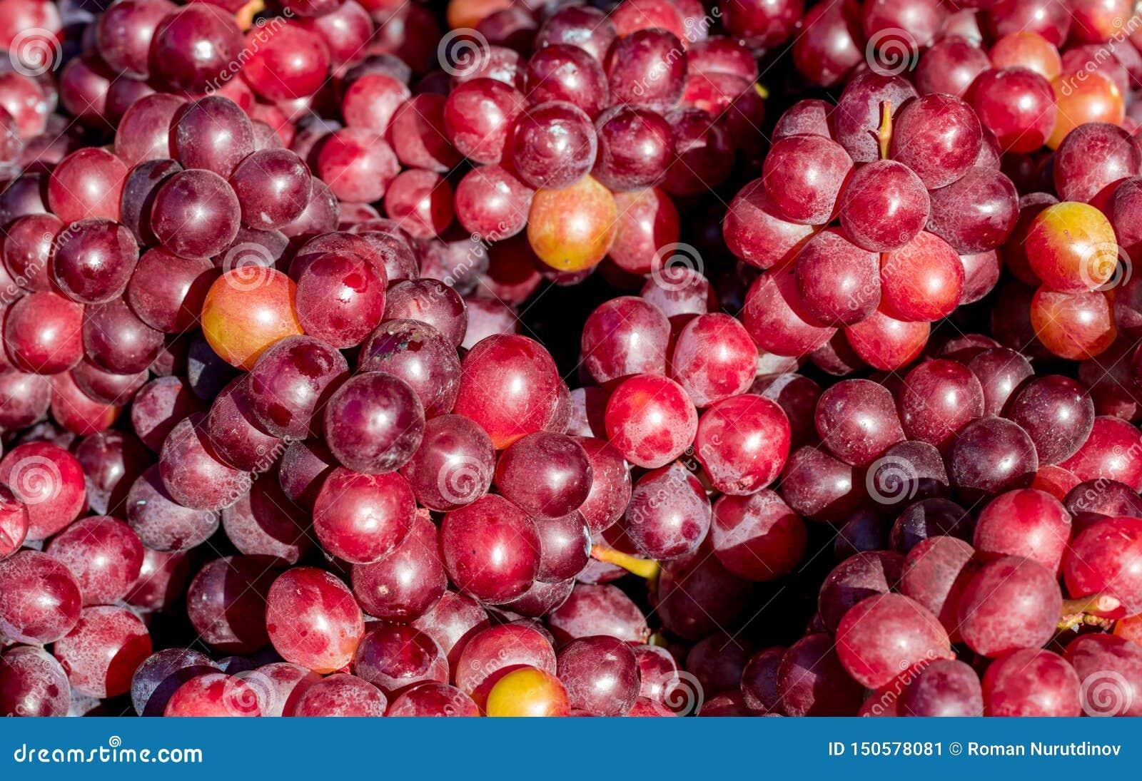 Dojrzali winogrona czerwona rozmaitość