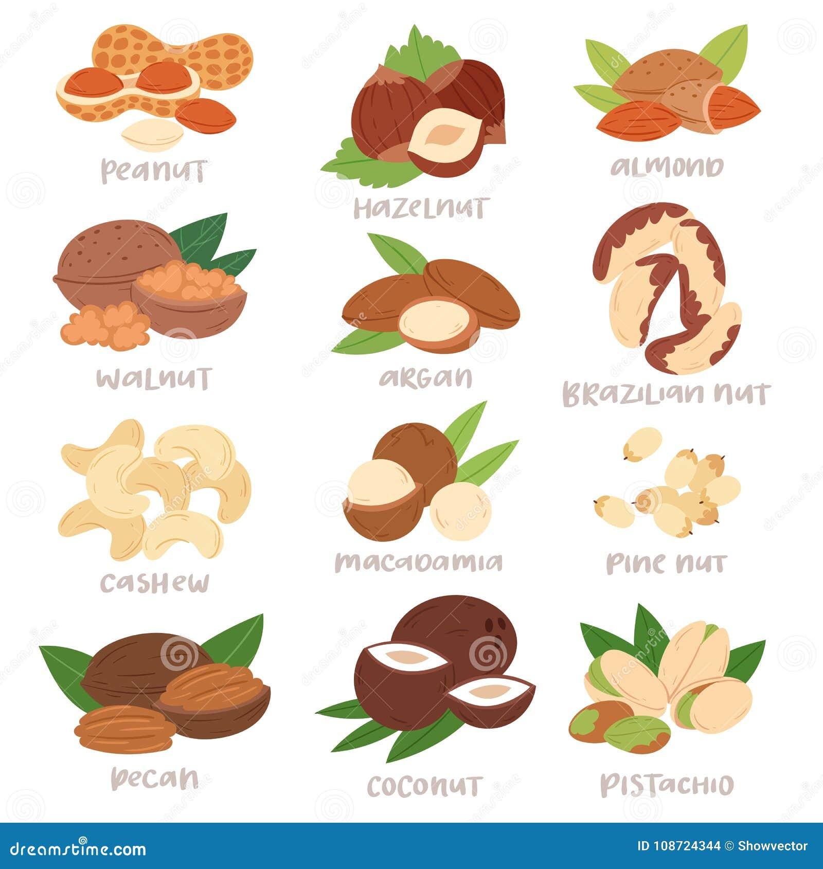 Dokrętki wektorowy nutshell hazelnut, orzecha włoskiego lub migdału dokrętki ustawia odżywianie z nerkodrzewu arachidem i kasztan