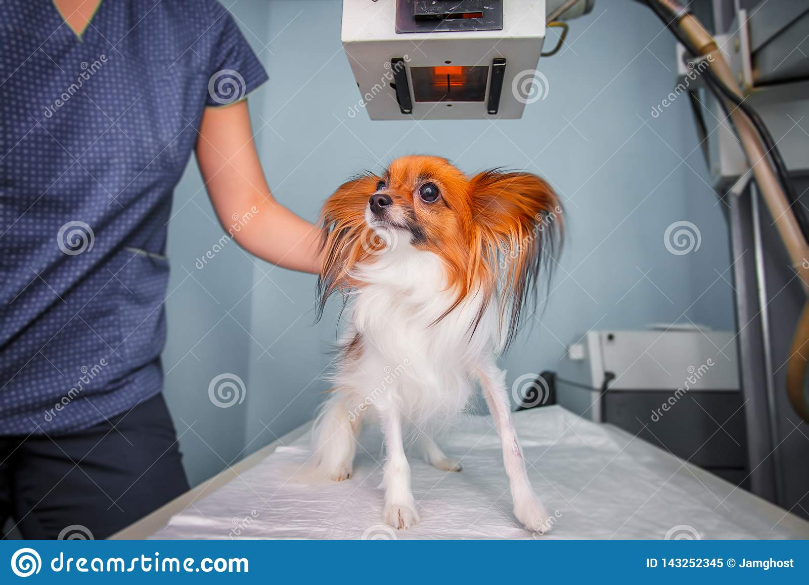 Doktorski egzamininuje pies w promieniowanie rentgenowskie pokoju